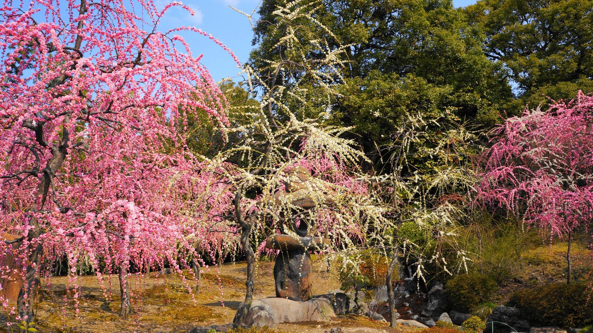 混んで当然の美しい梅の城南宮