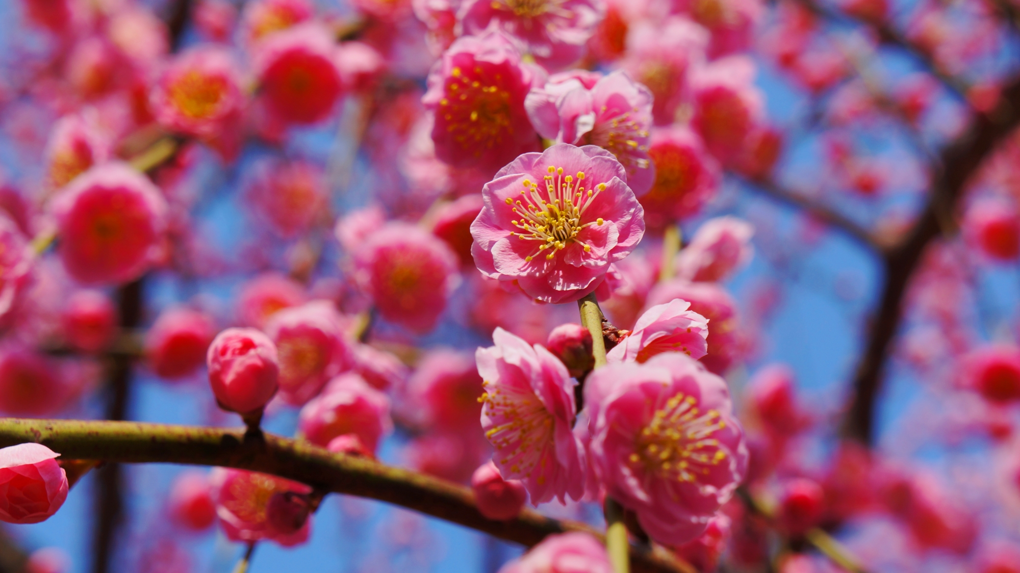 咲き誇る華やかで可愛い花