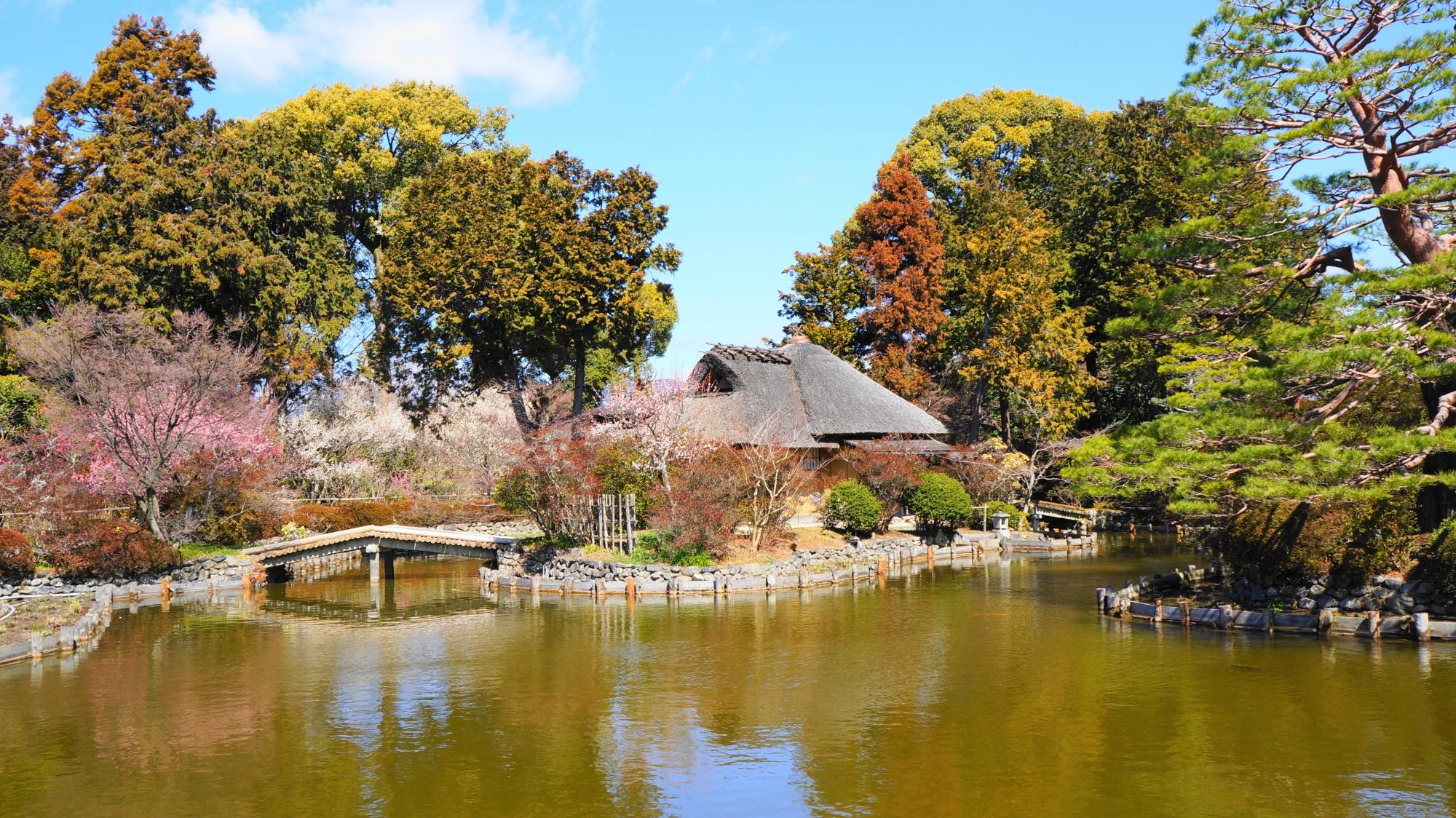 東神苑の咲耶池と池中亭茶室付近の梅