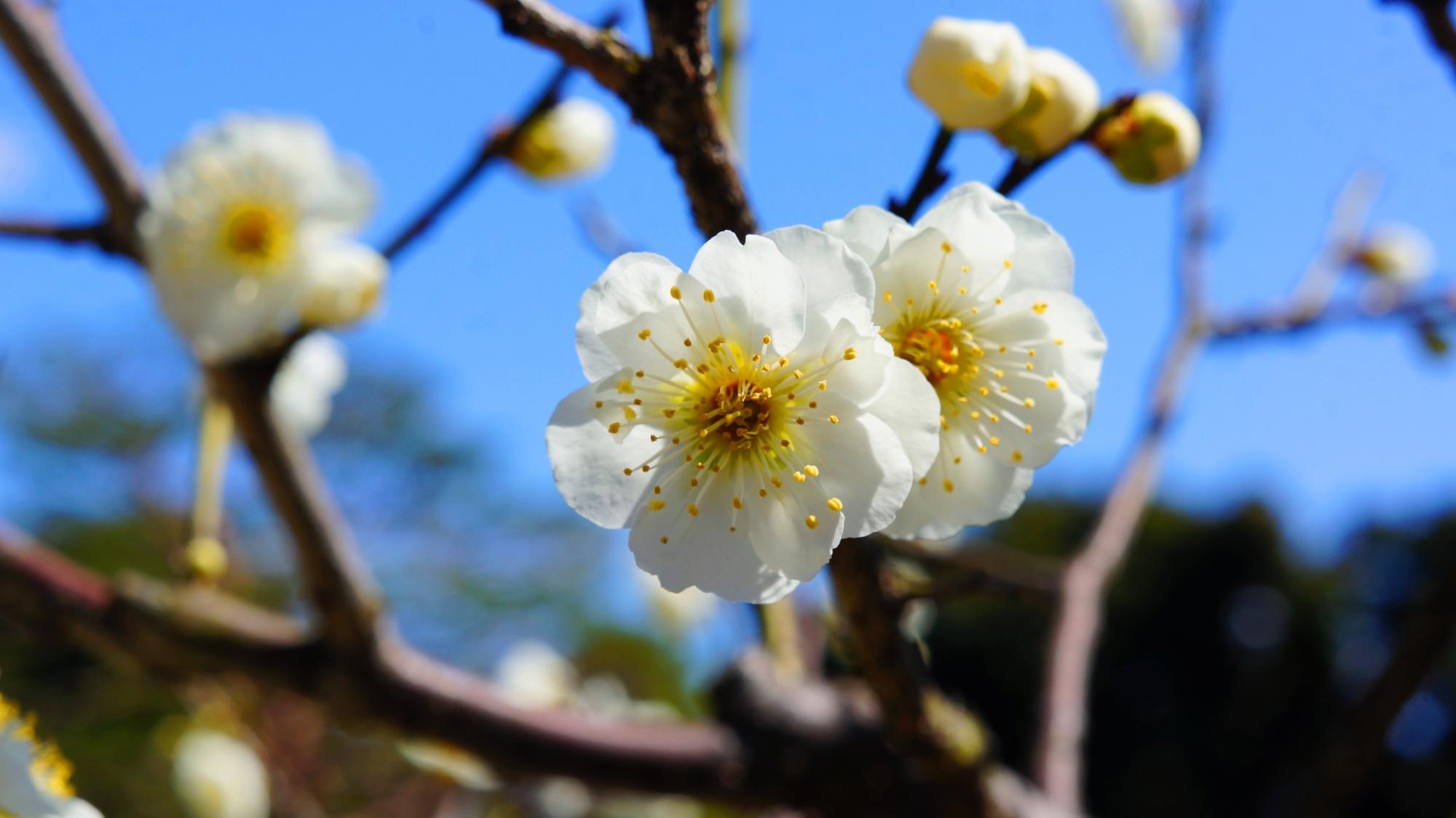 梅宮大社の春先の華やかな彩り