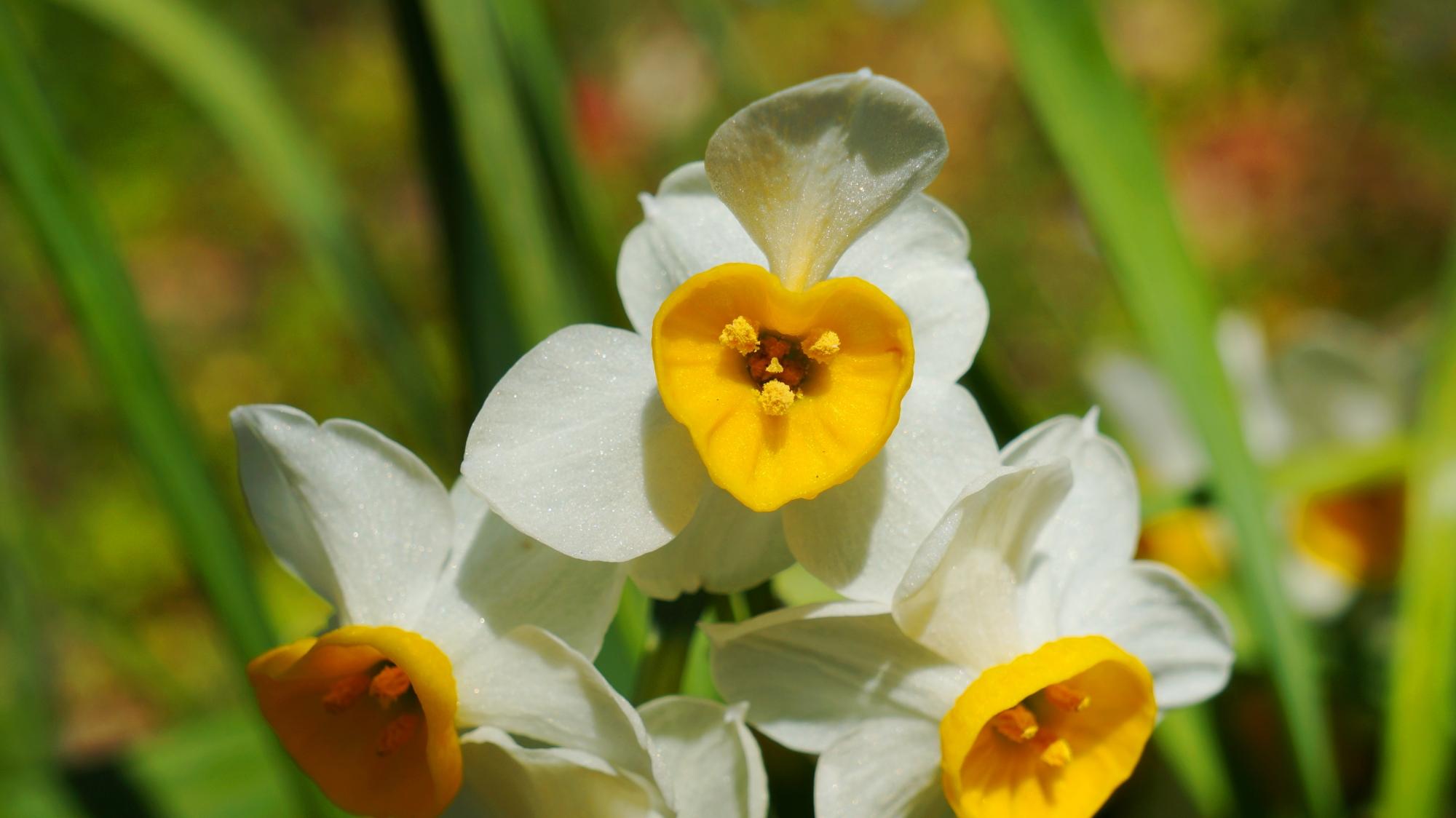 梅宮大社 梅 春先を彩る華やかな梅の花Post navigation