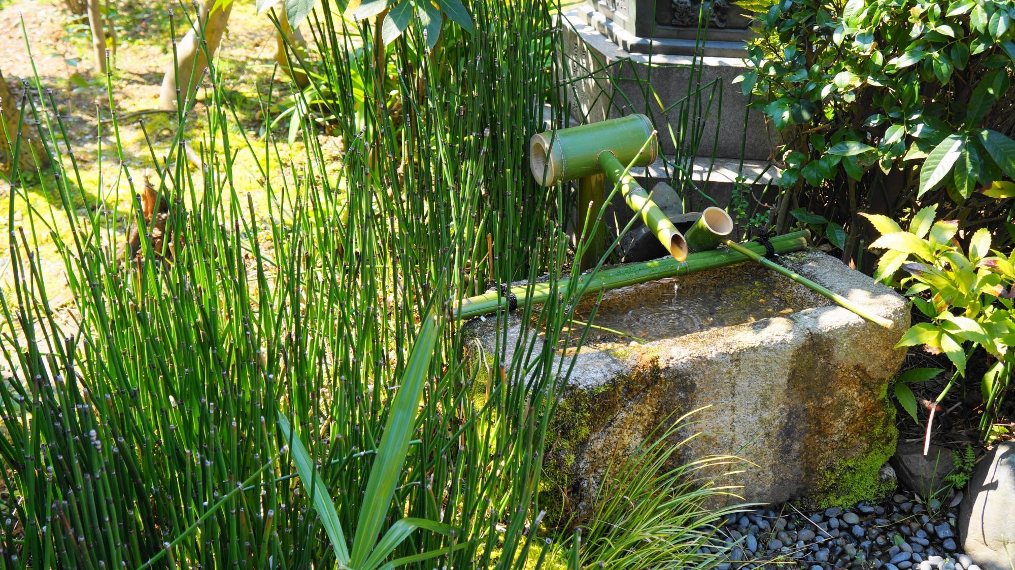 竹と石の手水鉢