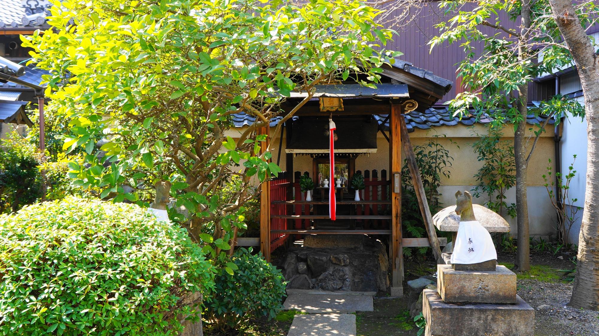蓮光寺のたくさんの緑につつまれた稲荷社