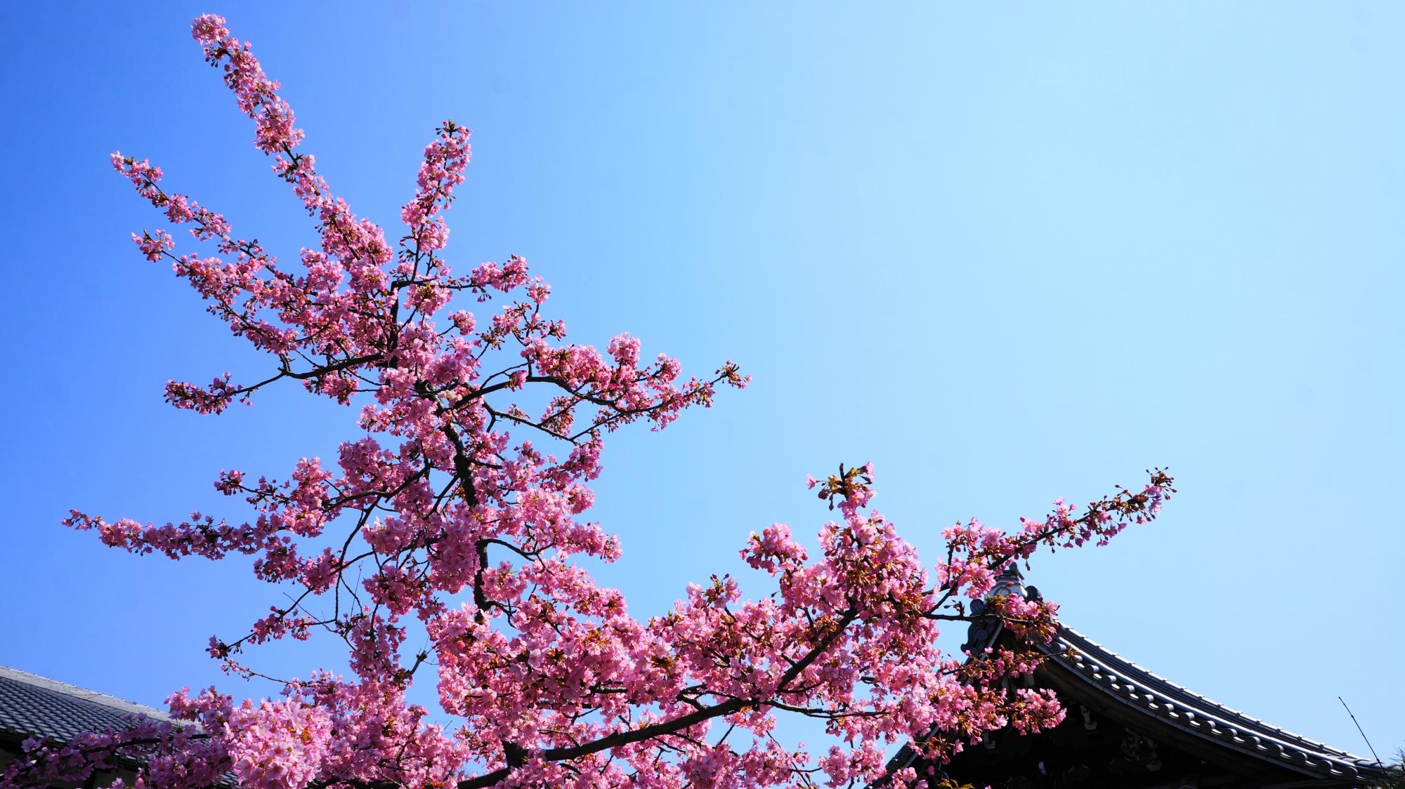 青空に映える濃い目の鮮やかなピンクの花
