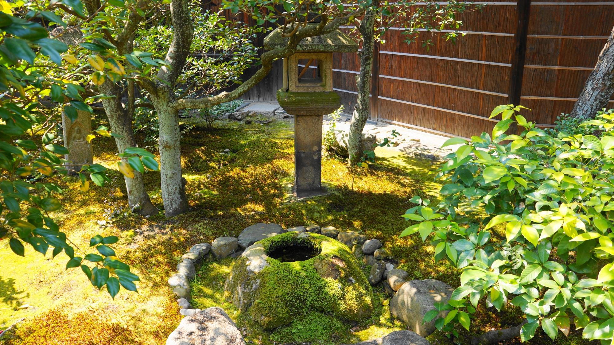 鮮やかな苔につつまれた園林堂