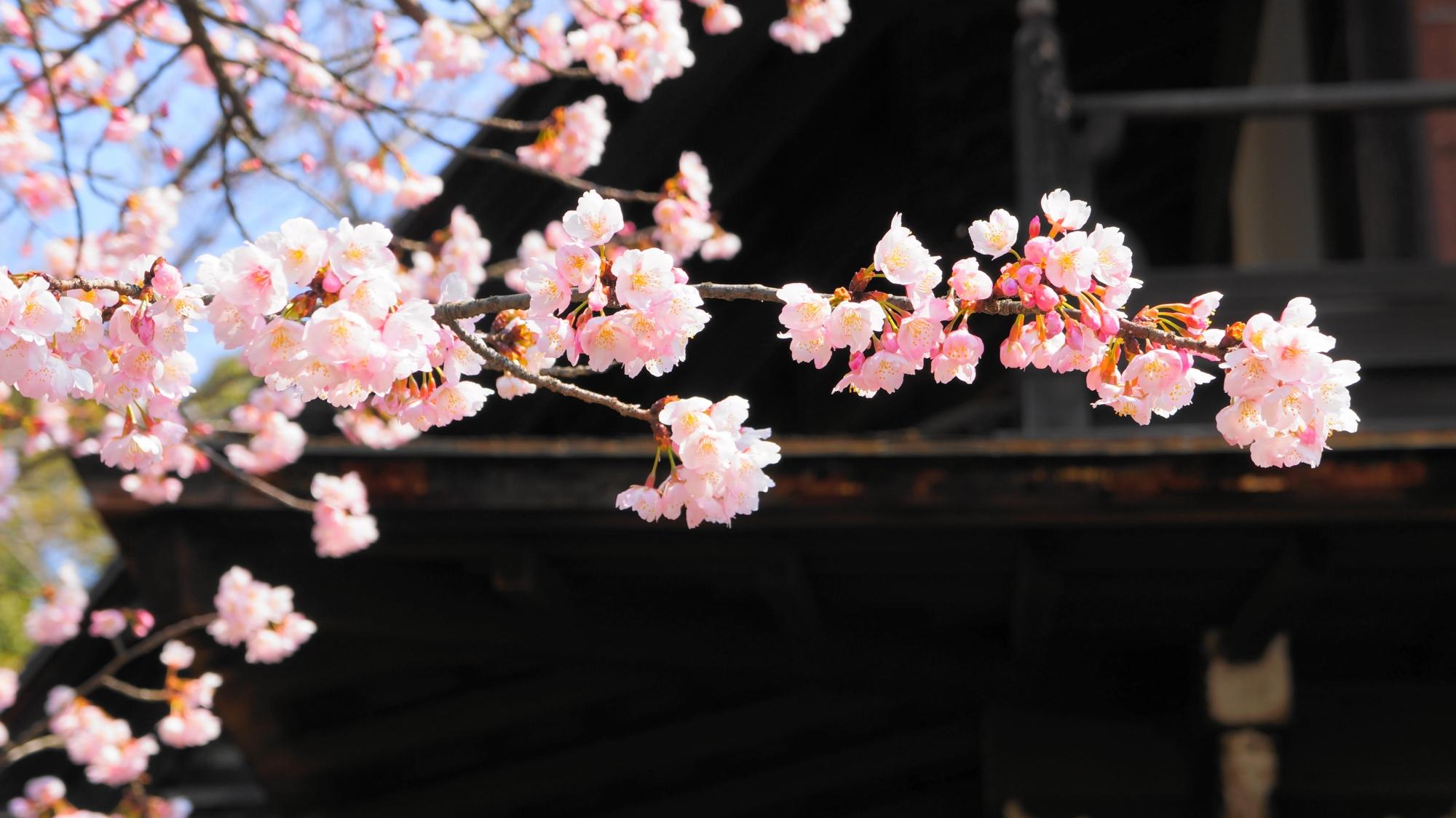 春の訪れを告げる可愛いピンクの花