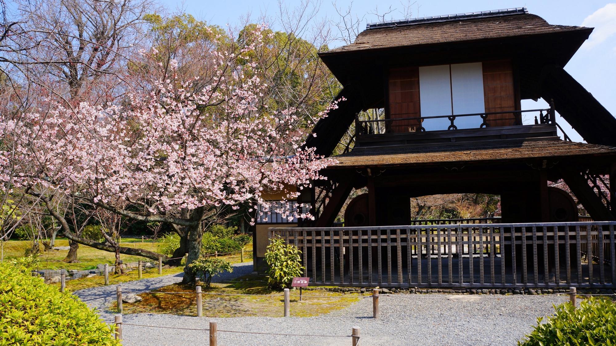 緑あふれる春先の庭園に佇む傍花閣と早咲きの桜