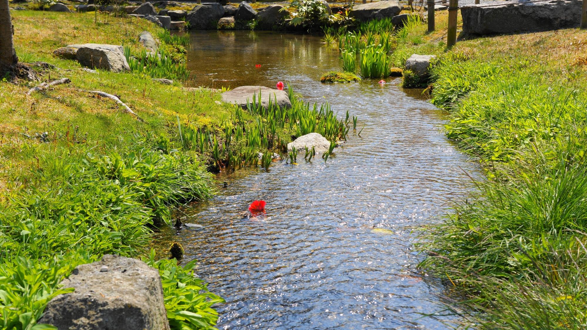渉成園の傍花閣付近の春の小川