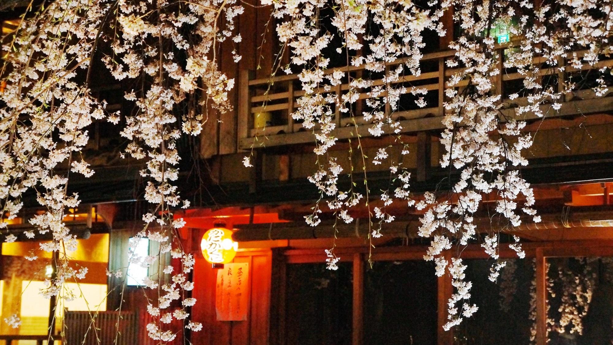 夜桜と情緒あふれる街並み