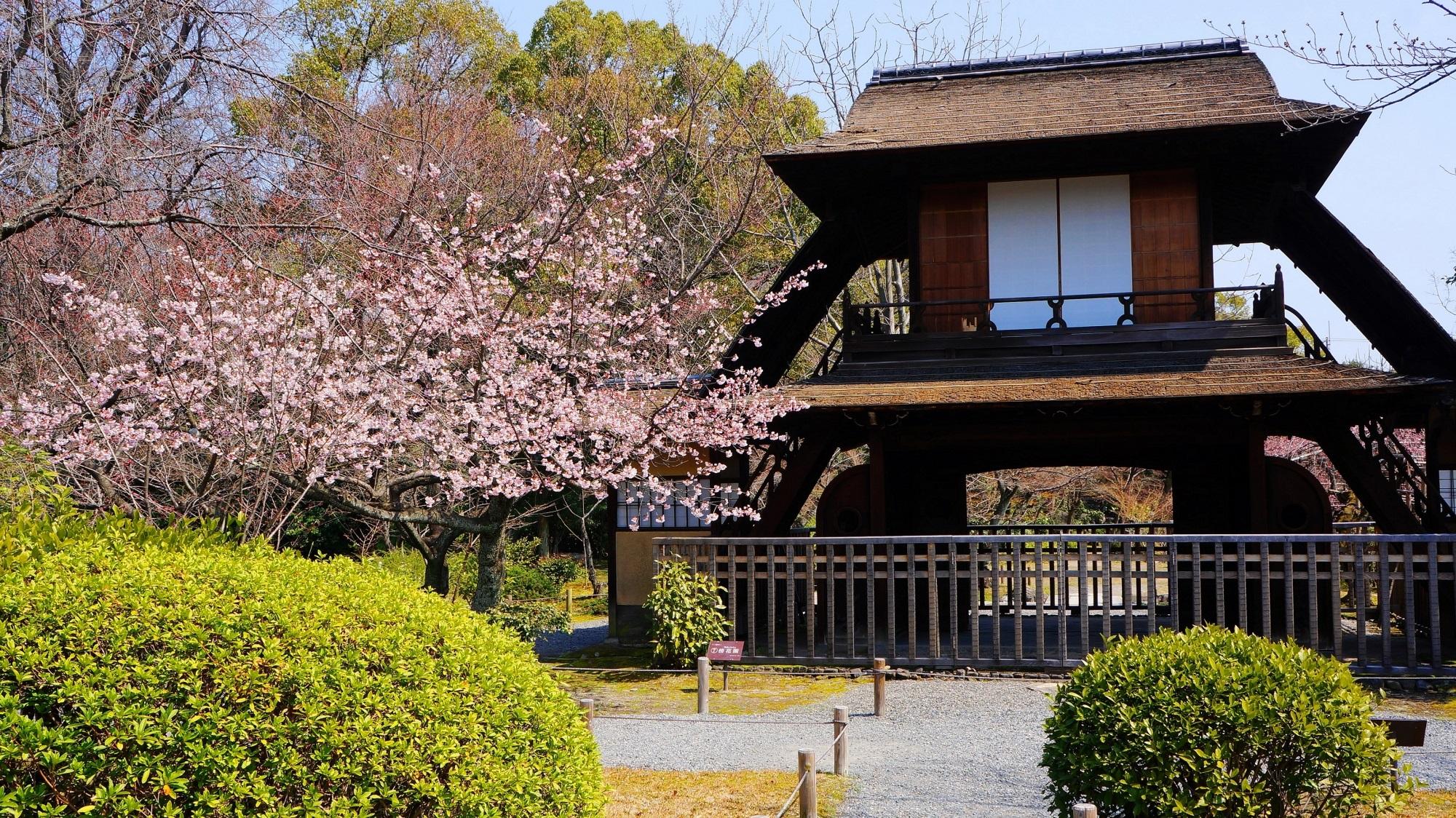 早咲きの修善寺寒桜と庭園を彩る花々