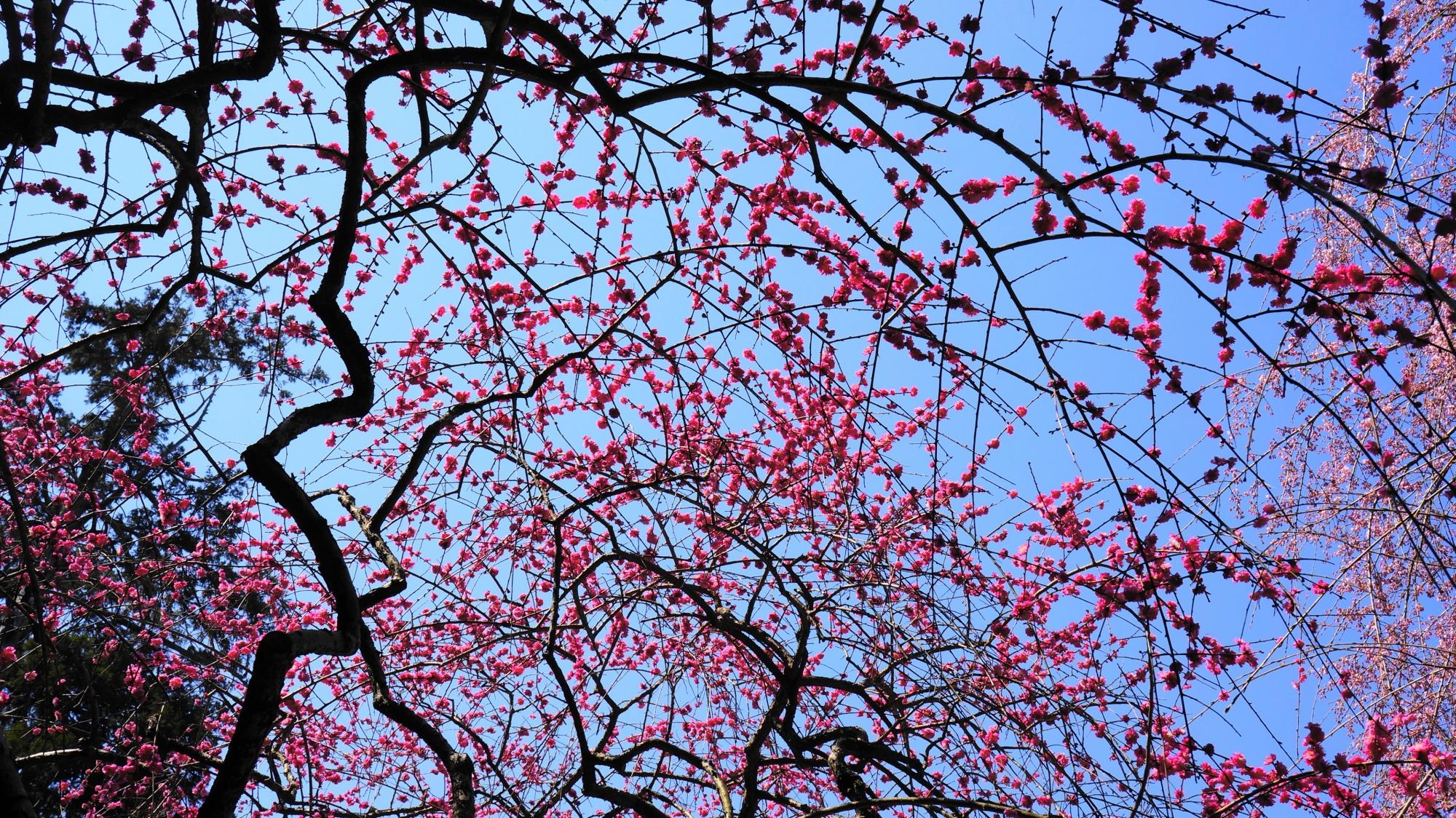 芸術的な梅の枝と花