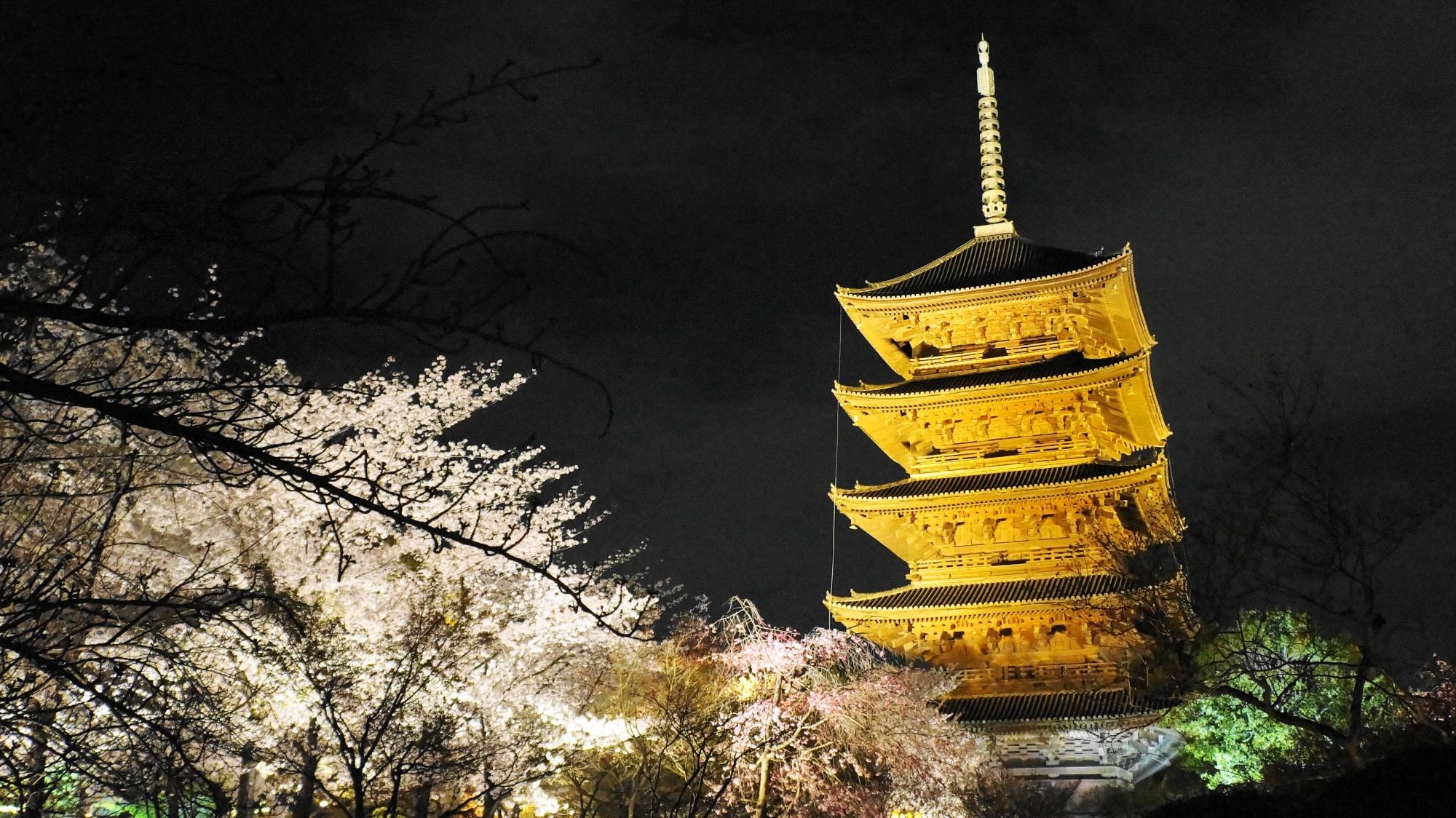 五重塔を彩る華やかな桜