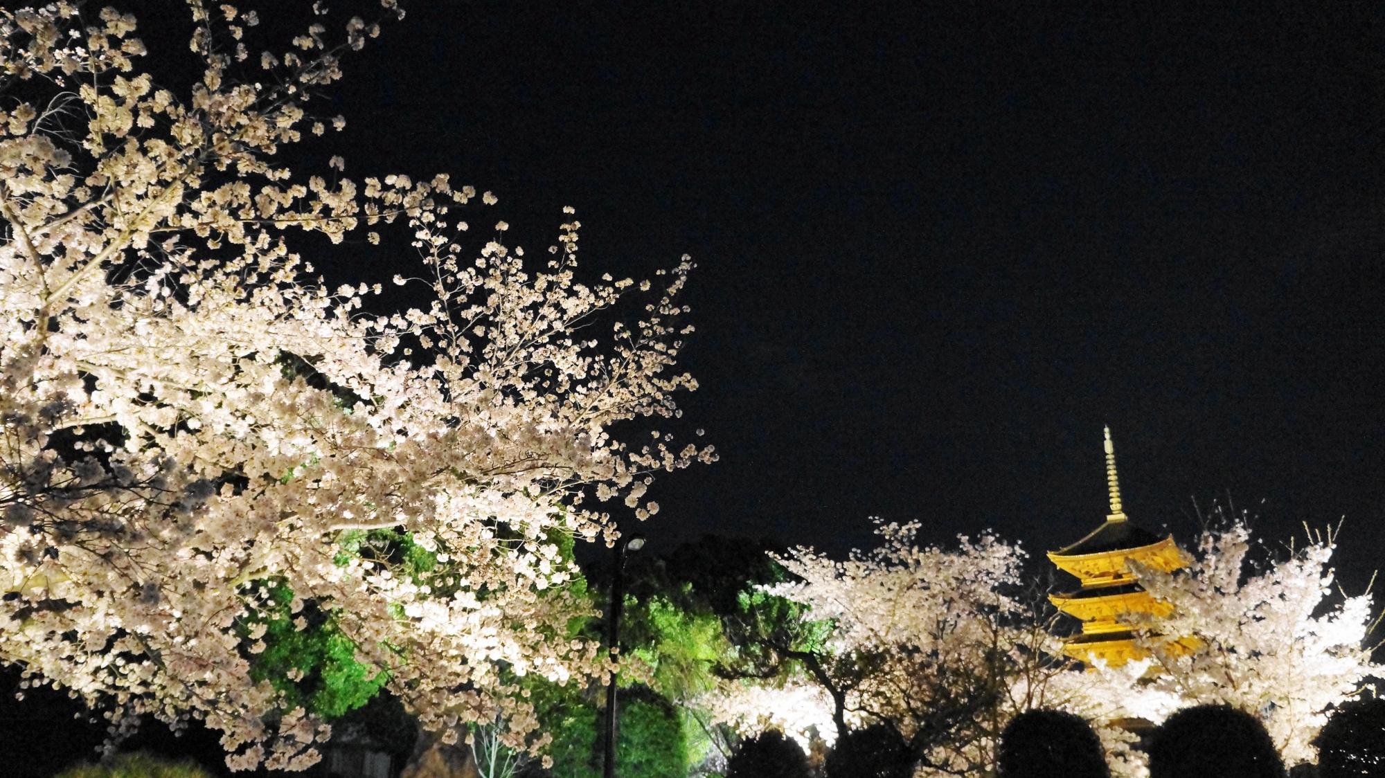 東寺の五重塔と夜桜のライトアップ