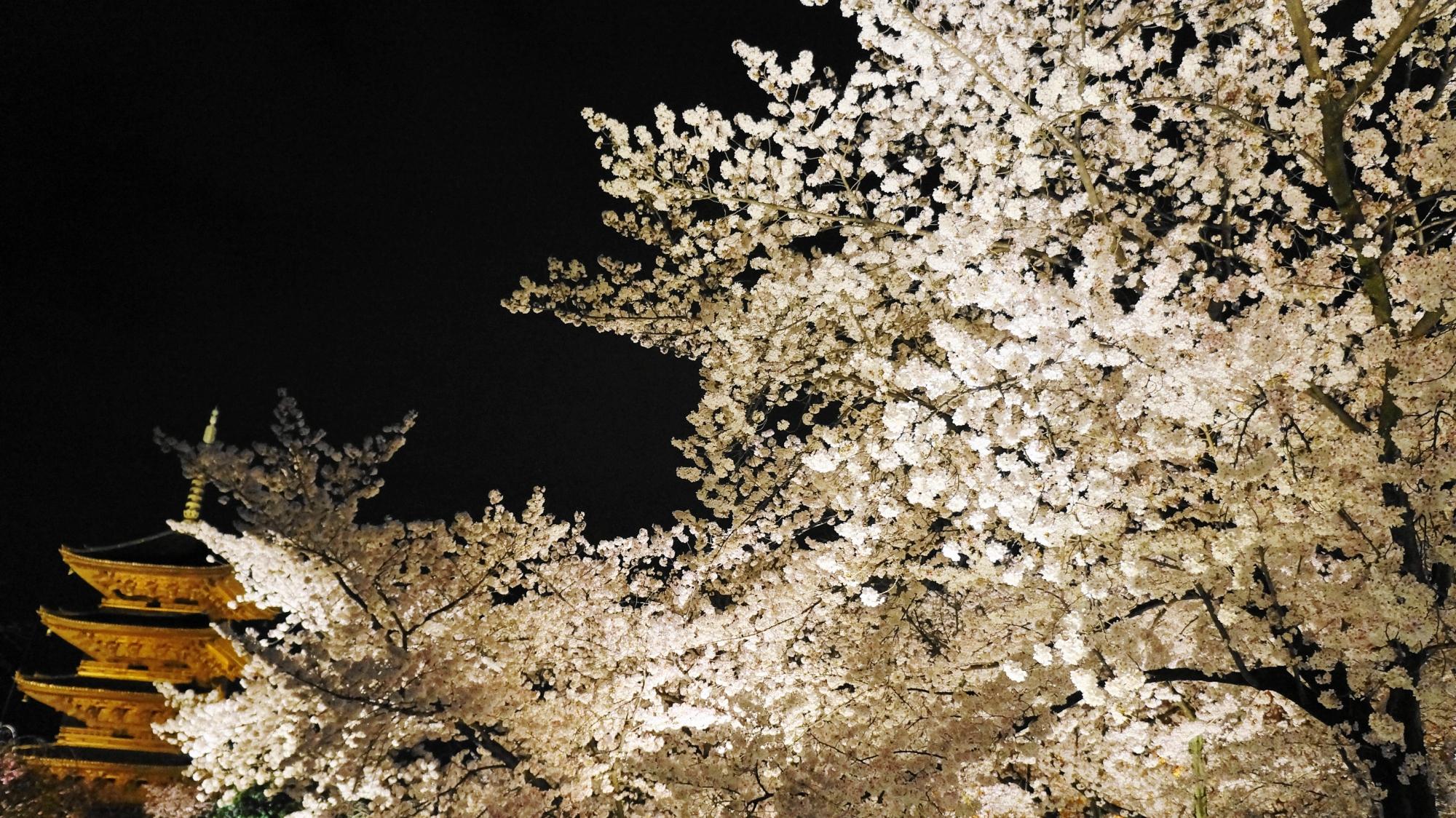 溢れ出す花をいっぱいつけた桜