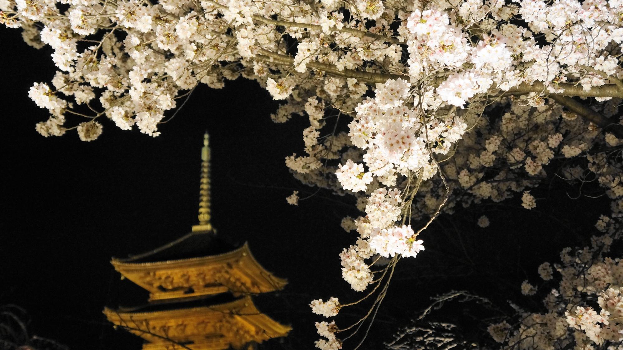 見事な夜桜につつまれた東寺の境内