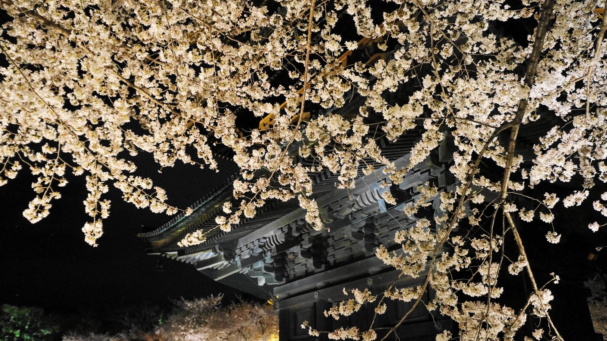 五重塔の下あたりの桜
