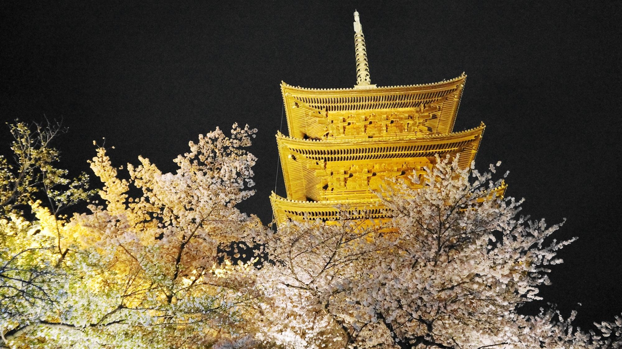 金色に照らされた五重塔と桜の幻想的な雰囲気