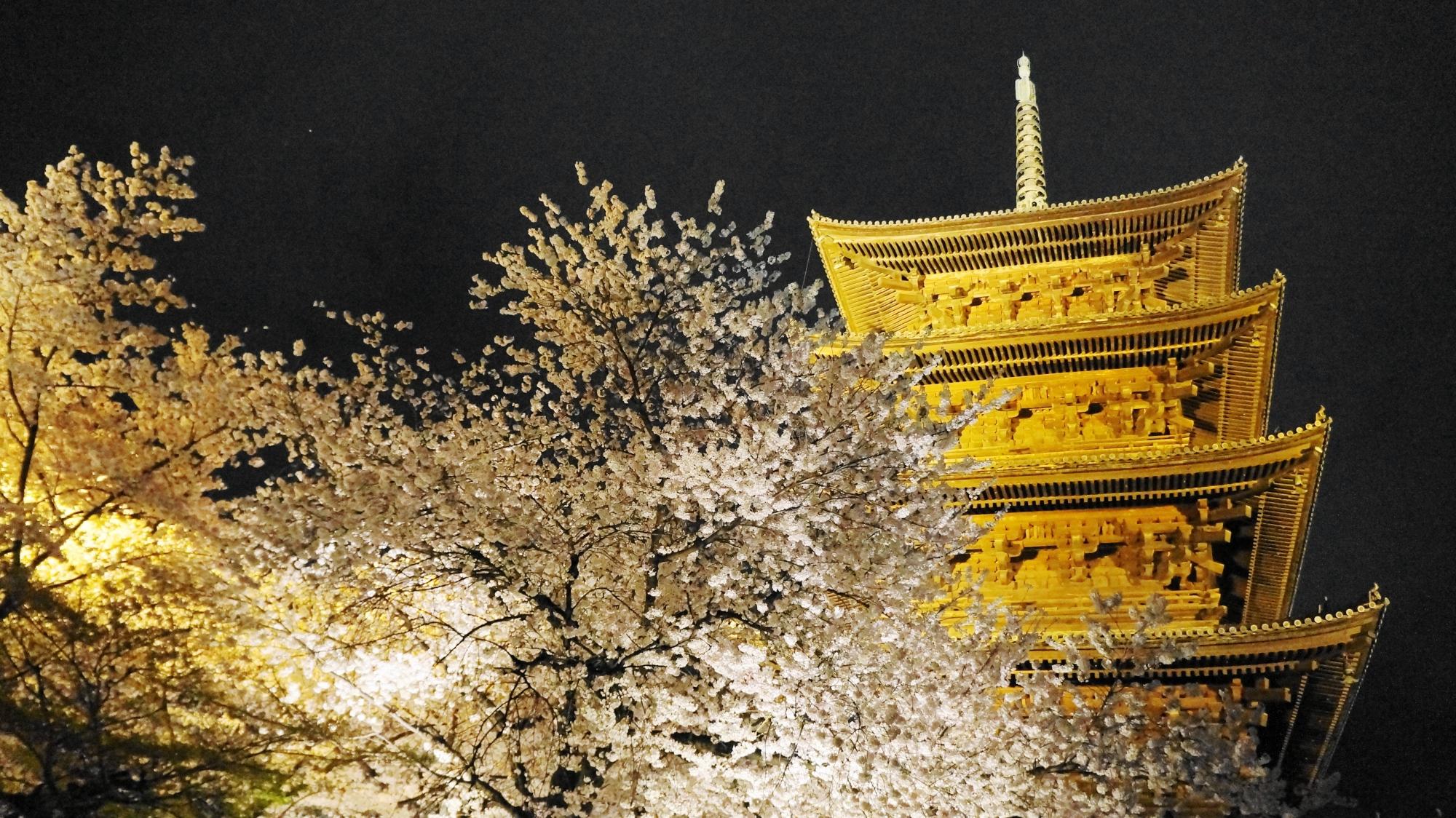 下から見上げた五重塔と満開の夜桜