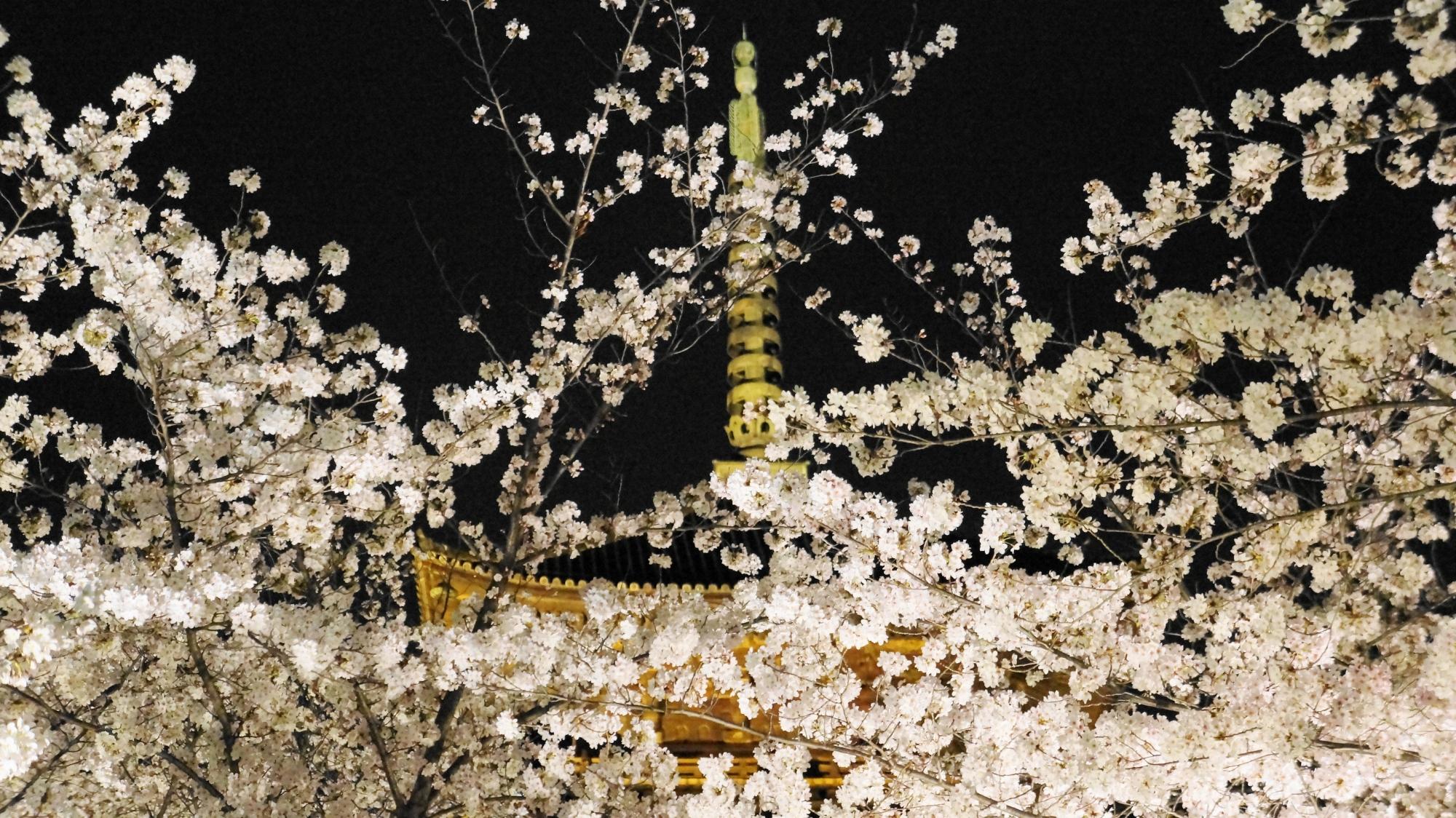 弾けんばかりの元気な桜の花