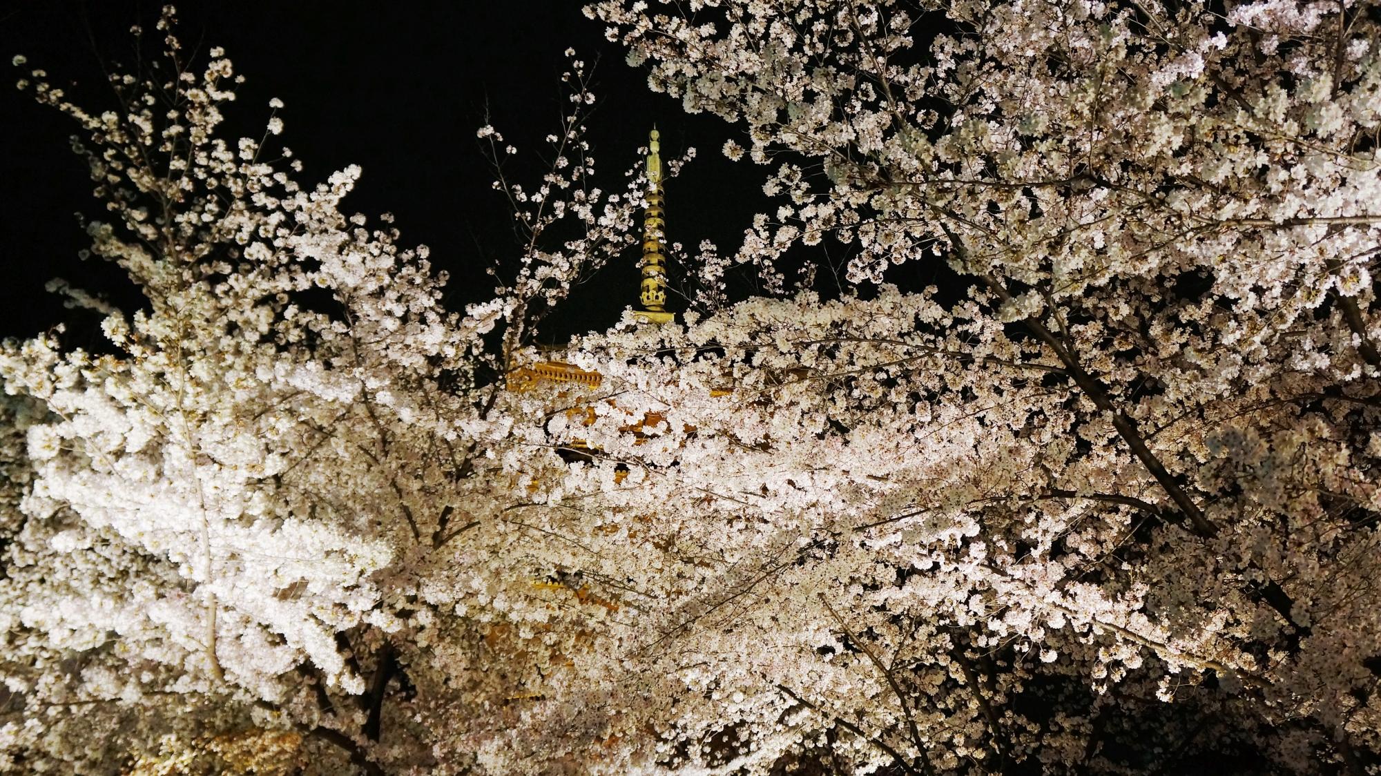 高画質 写真 東寺 夜桜