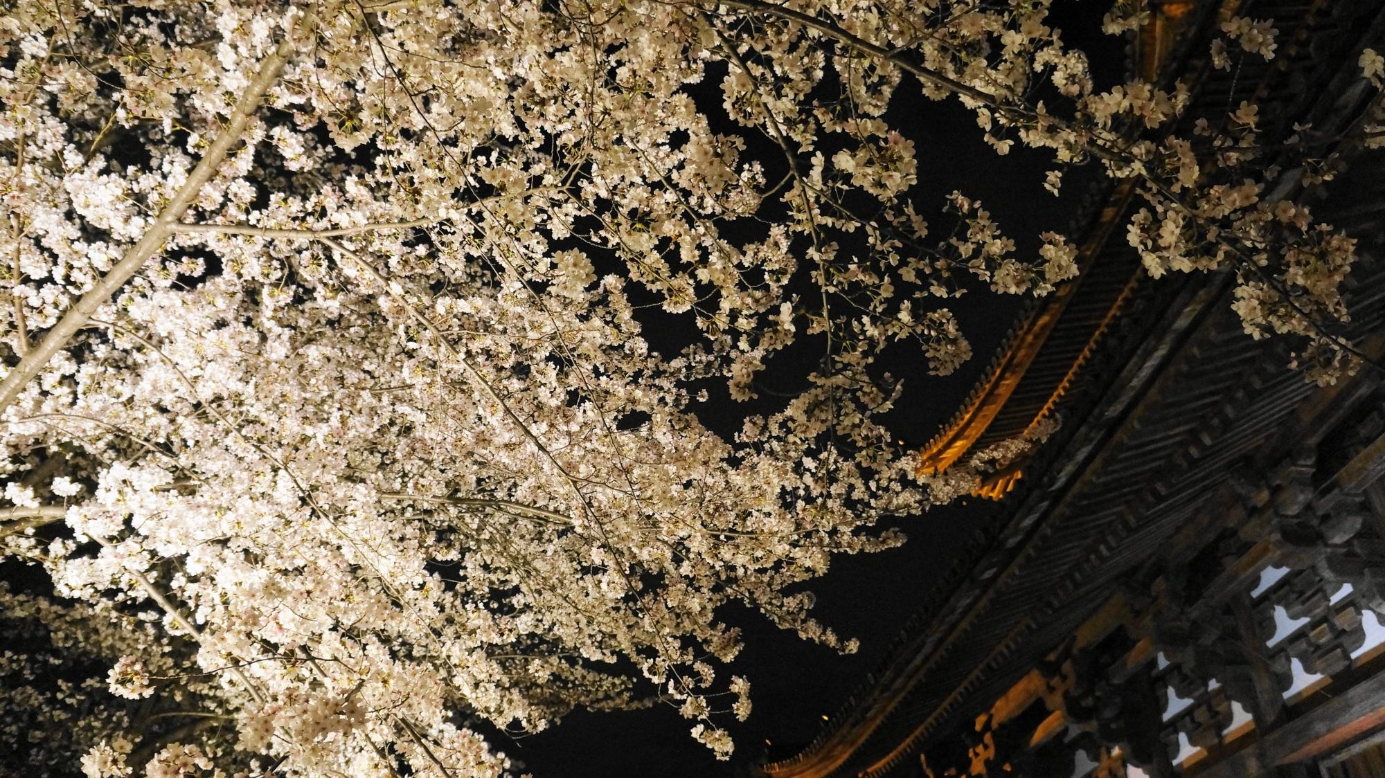 輝く桜につつまれた金堂