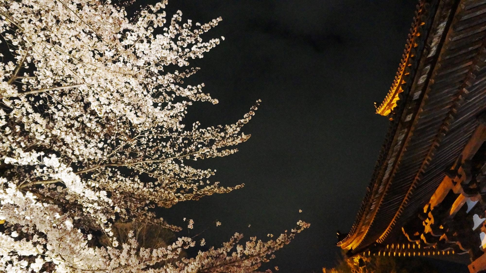 金堂と華やかな桜