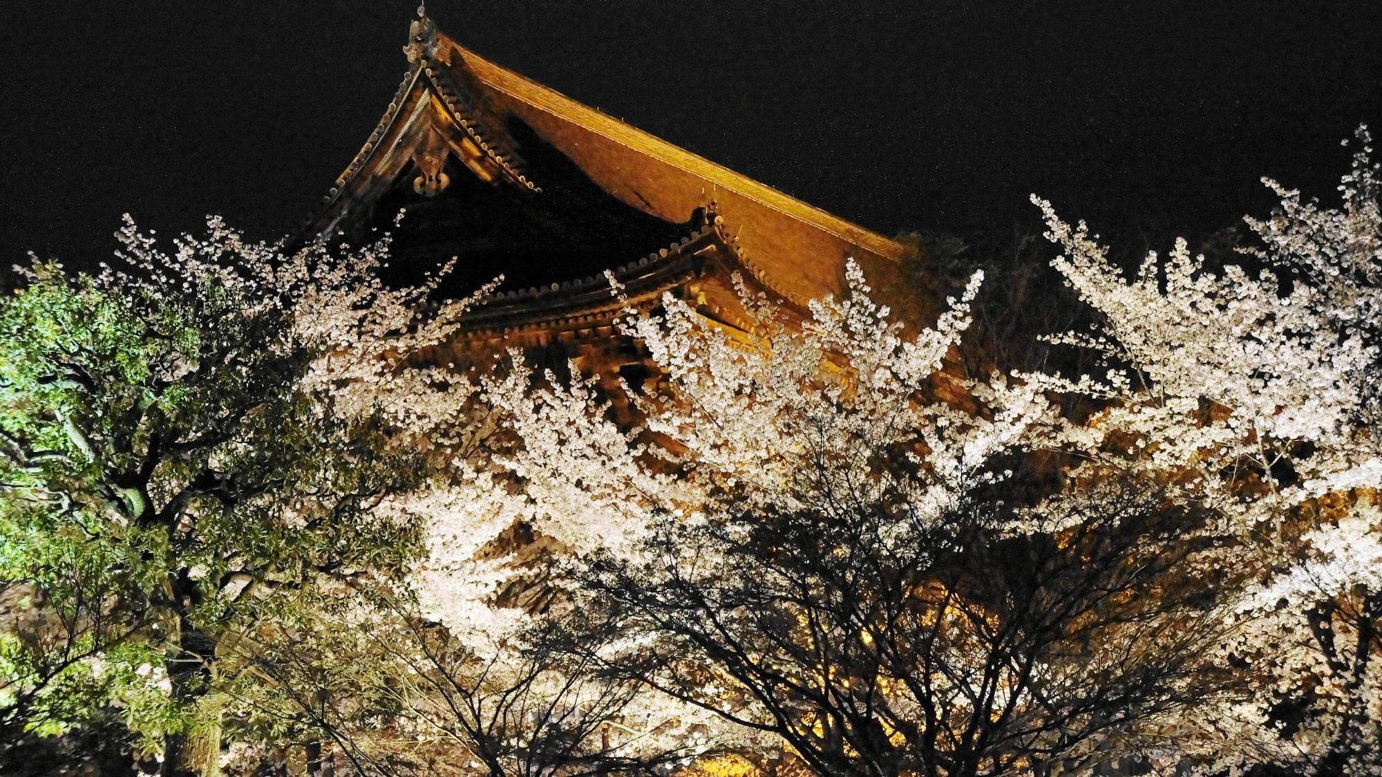 東寺の講堂と桜のライトアップ