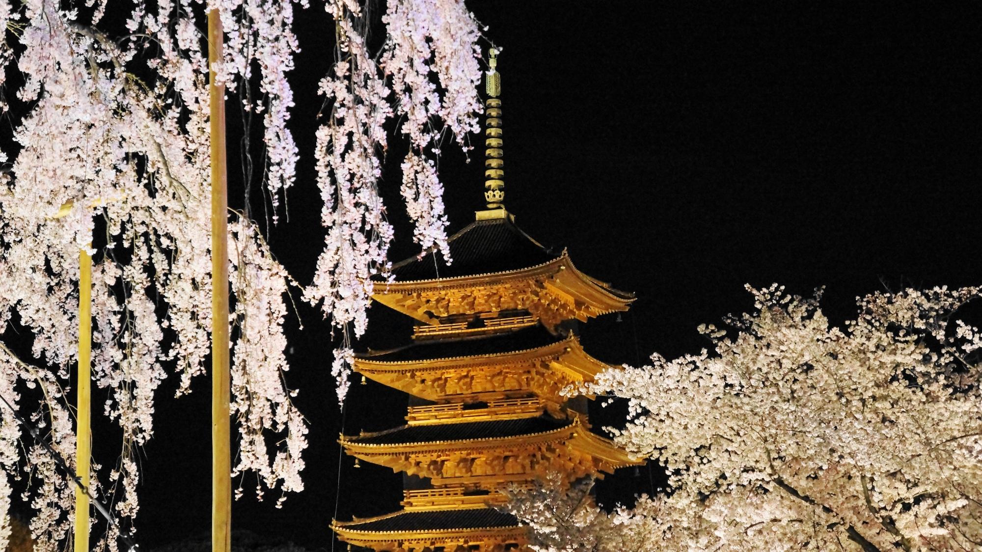 五重塔を煌びやかに彩る不二桜