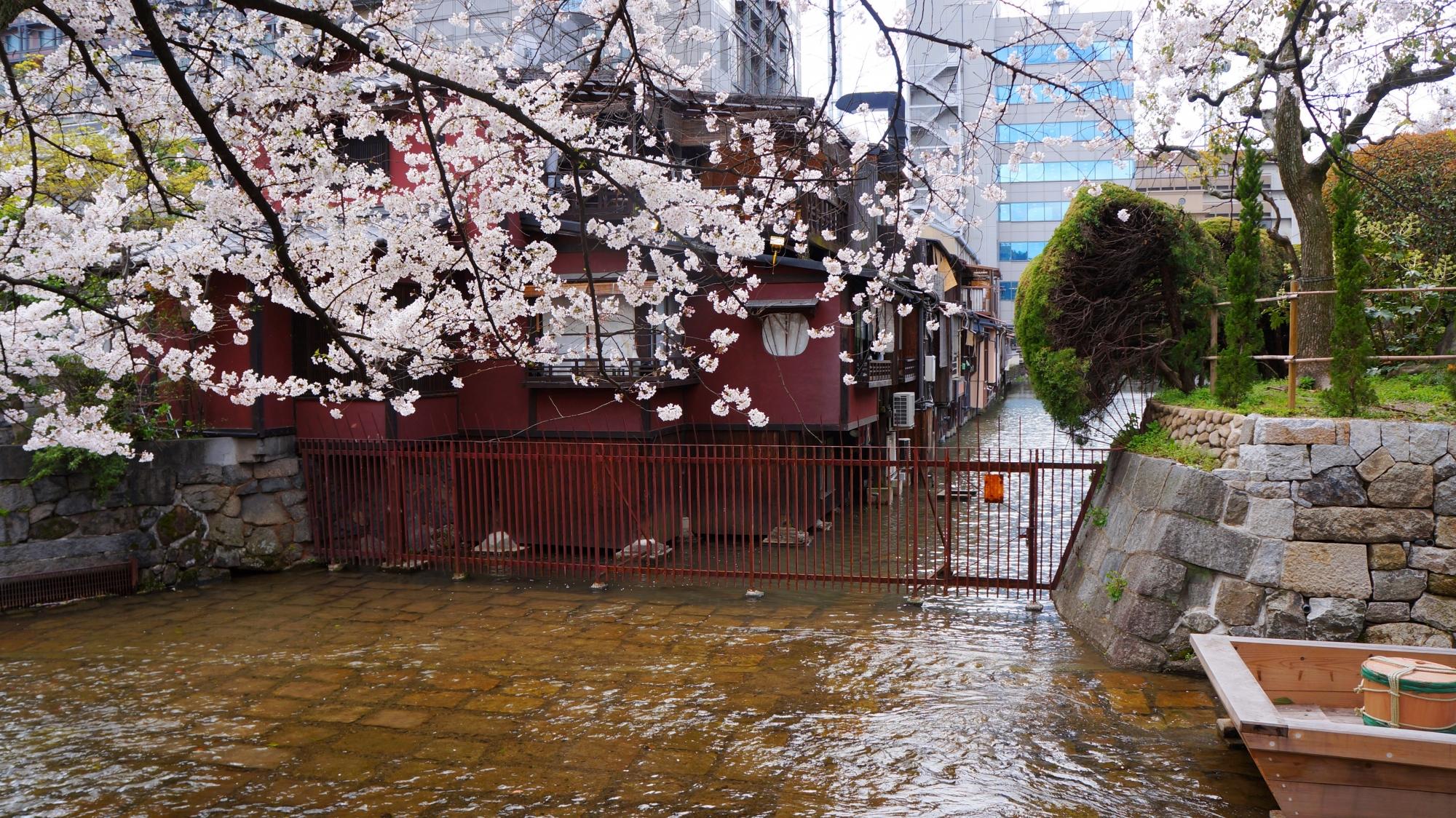 高瀬川が建物沿いに流れる何とも情緒ある春の風景