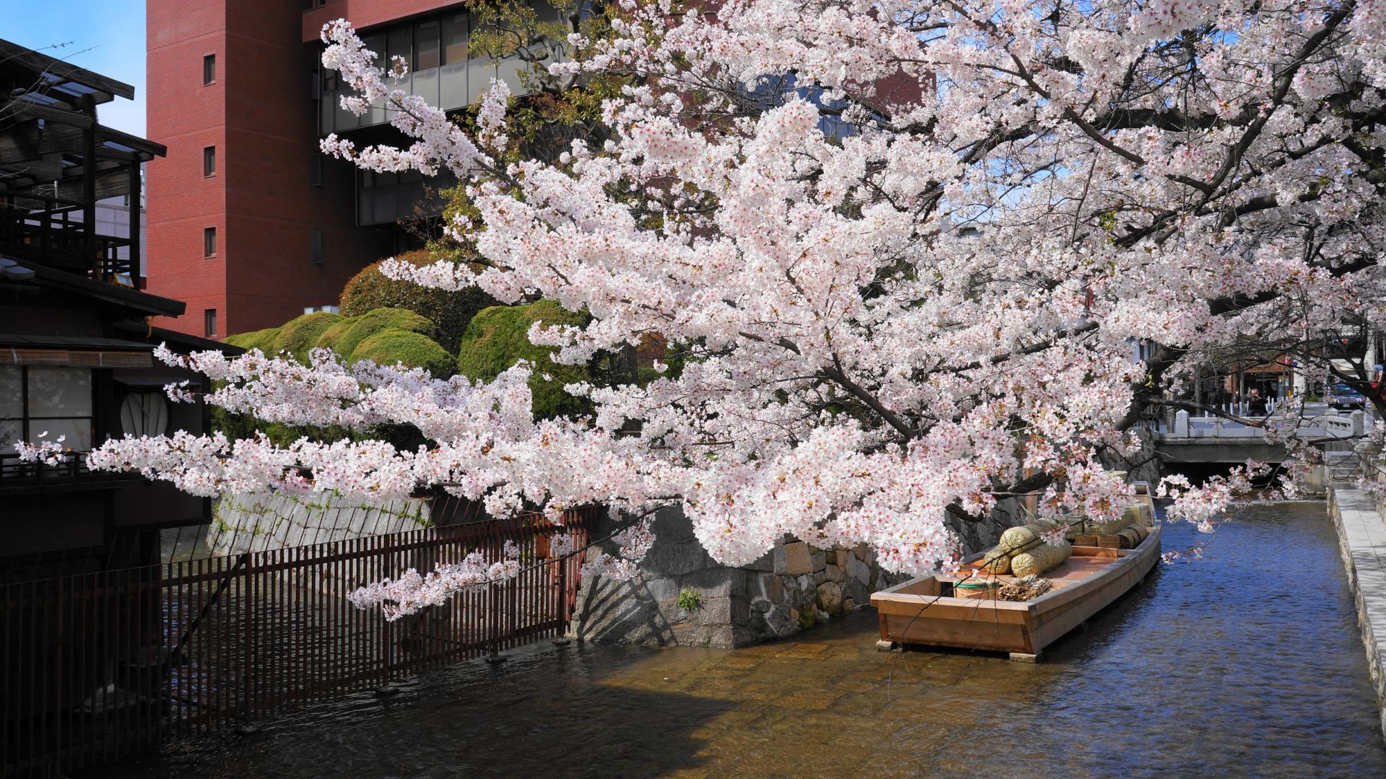 高瀬舟と桜が良く合い、風情が ...