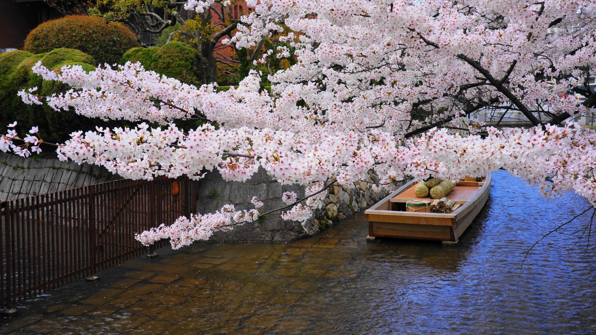 ピンクや白の春色につつまれた高瀬川一之船入高瀬川一之船入(たかせがわいちのふないり)