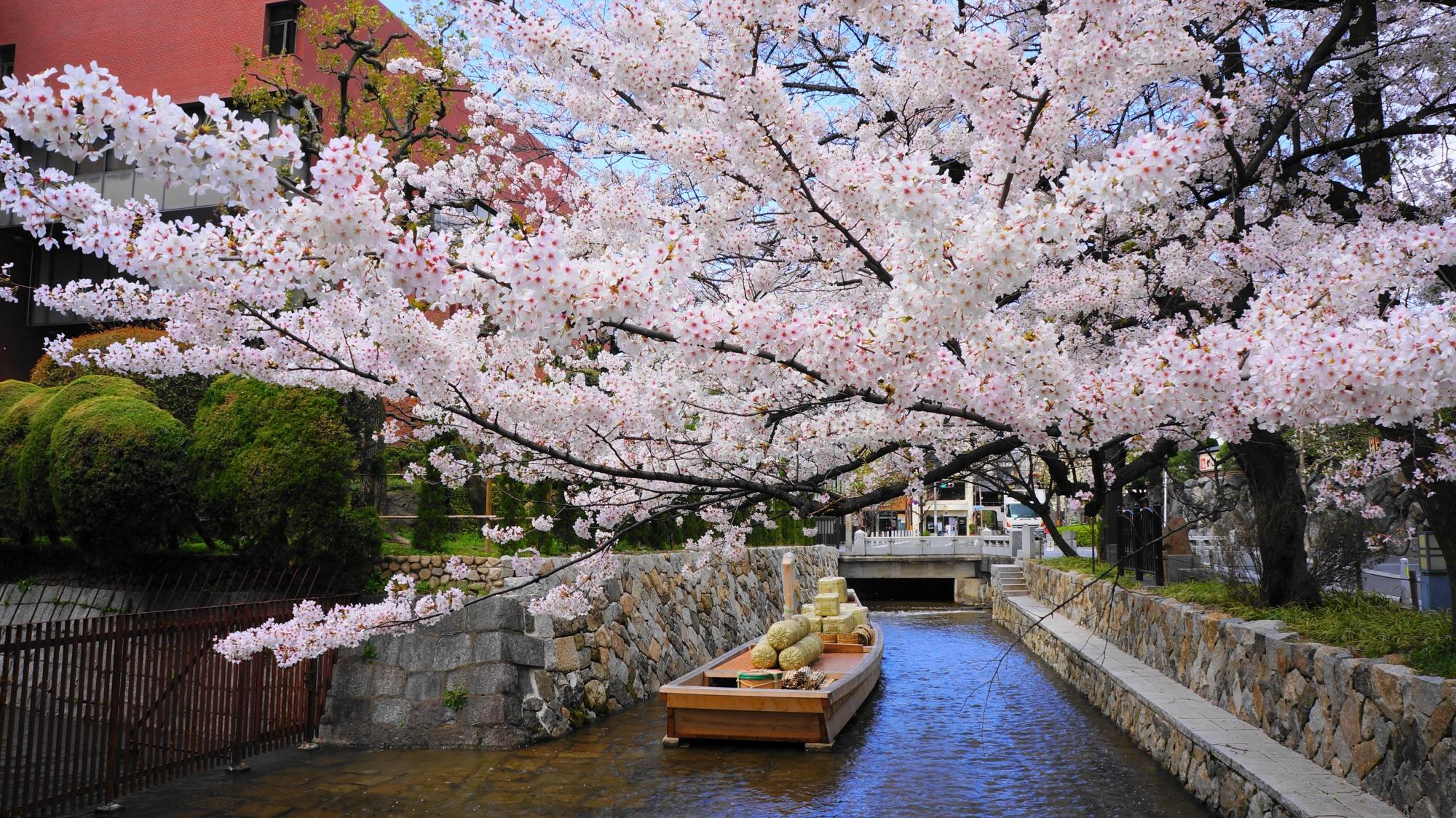 高瀬川一之船入の素晴らしい桜と春の情景