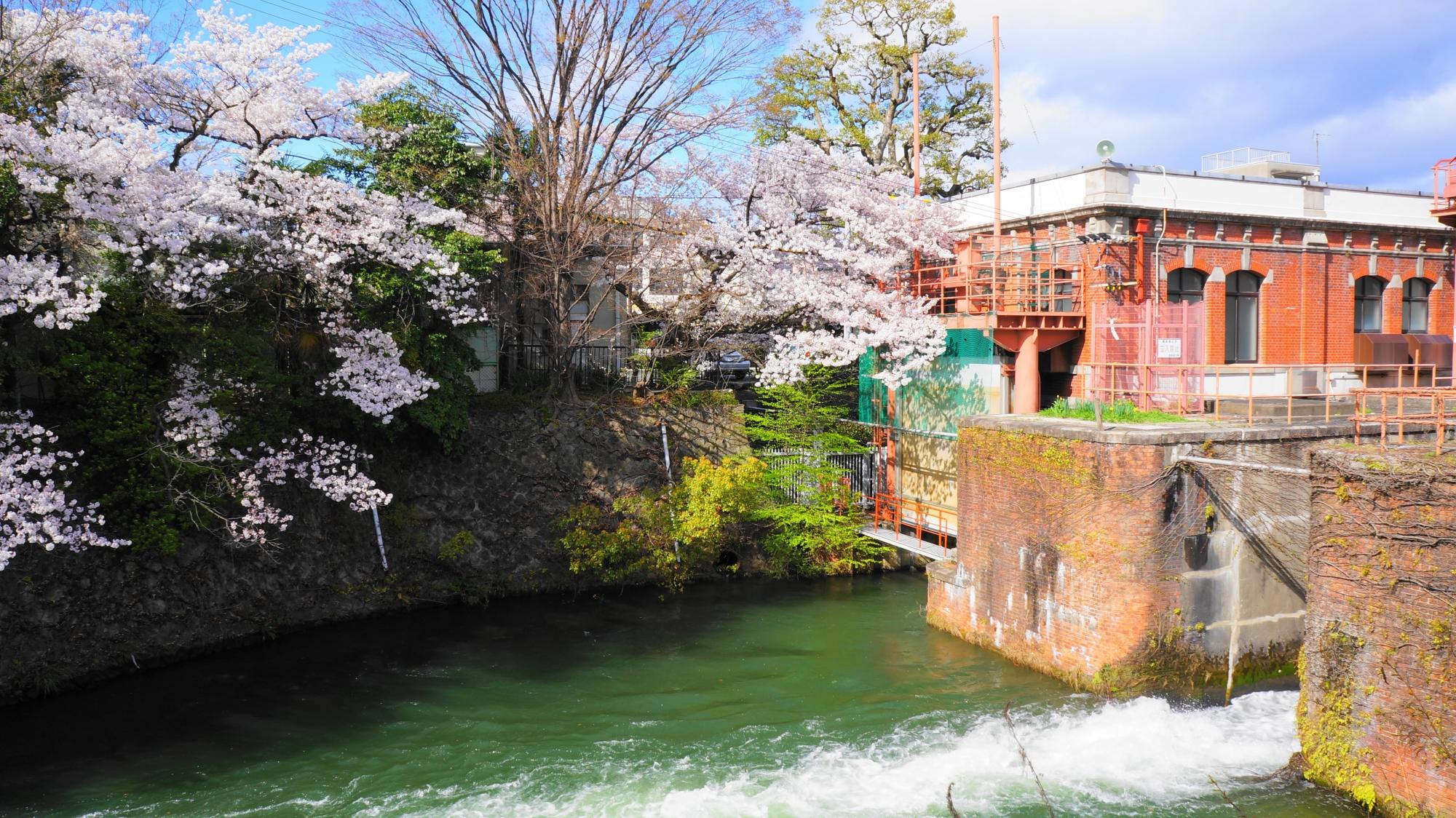 レトロな雰囲気が良い感じの夷川発電所と桜