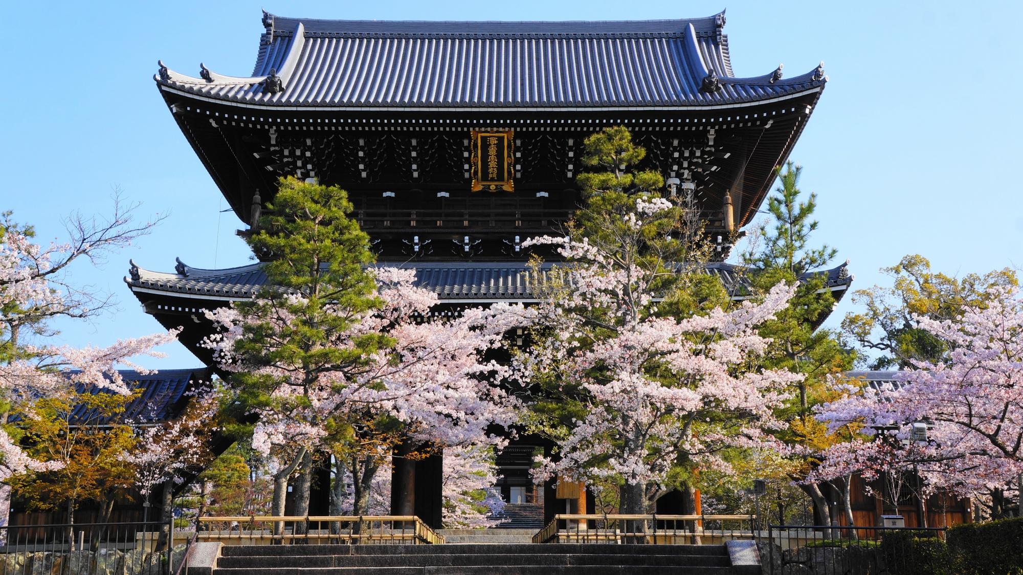 雄大な山門を華やかに彩る桜