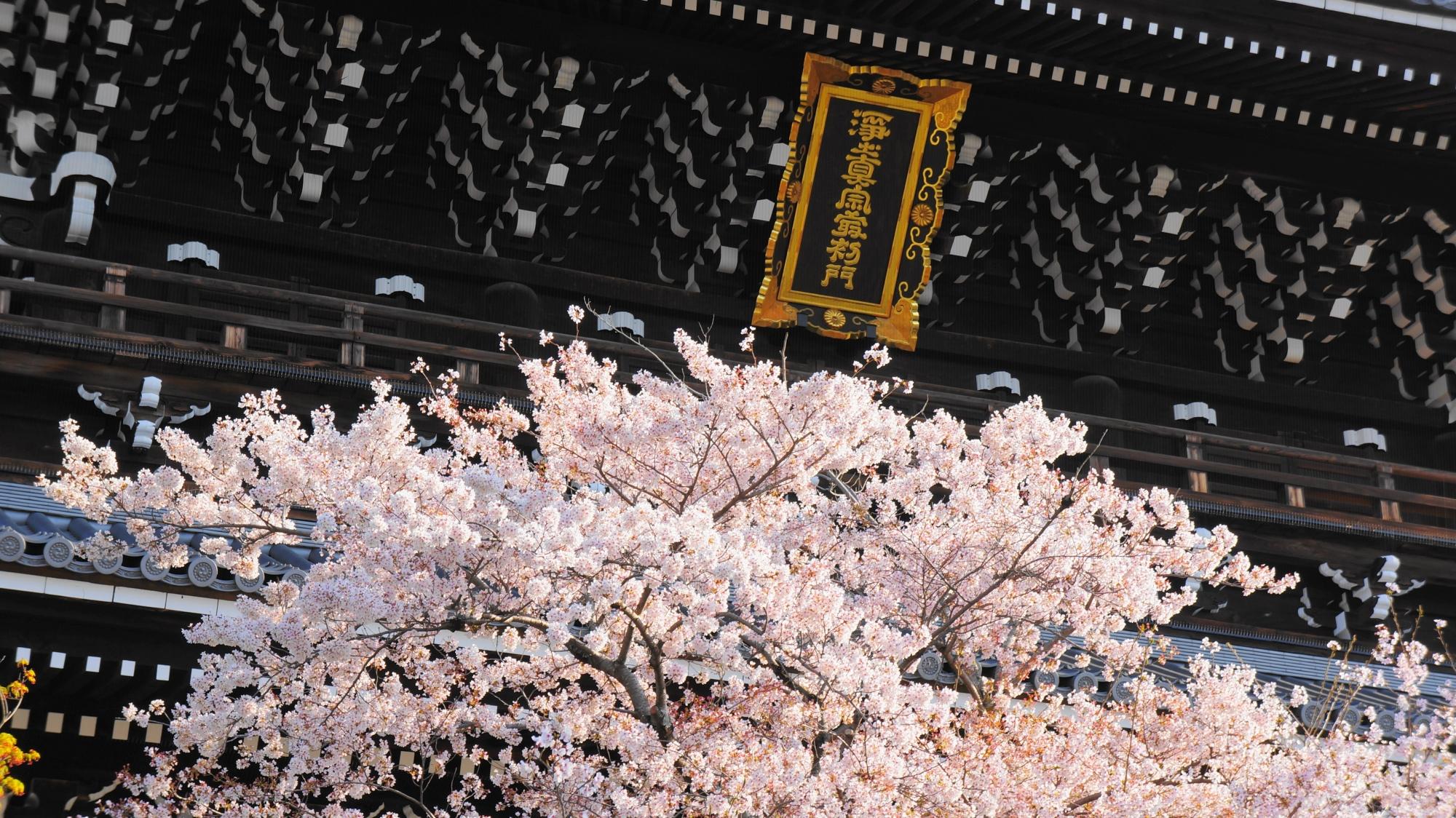 輝く扁額を華やかに演出する桜