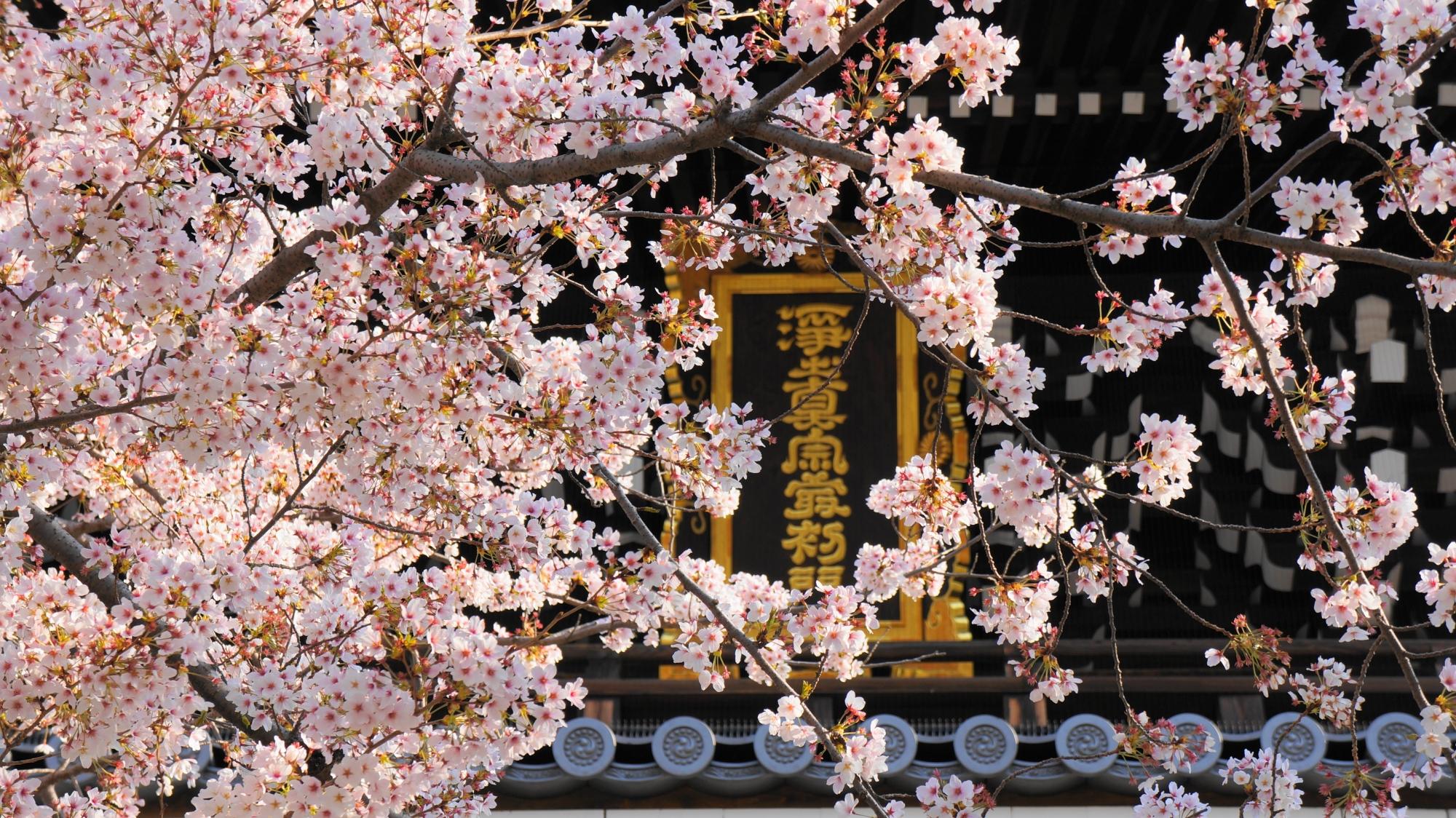 桜につつまれた山門の扁額