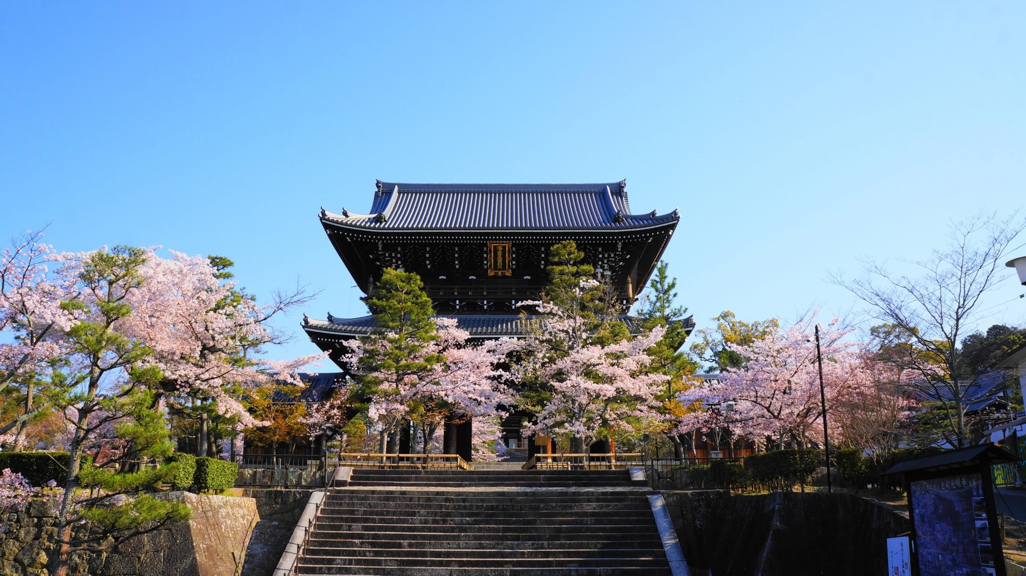 澄んだ青い空に映える山門と見事な桜