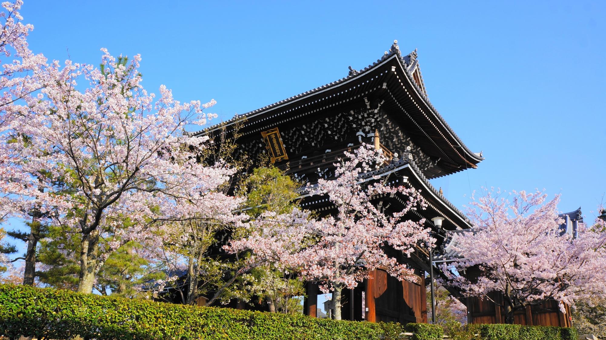 桜の中で凛として佇む山門で