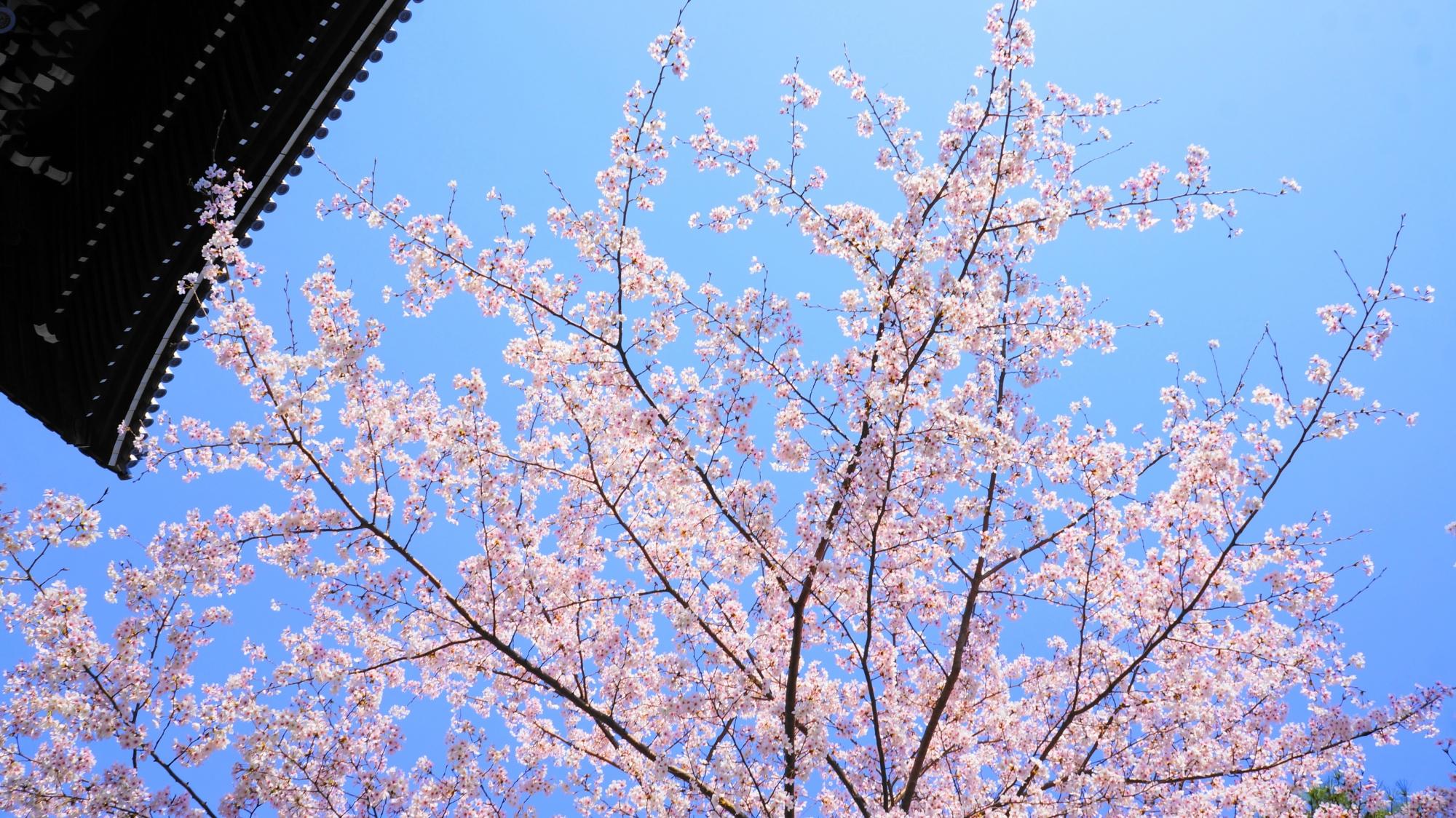 快晴の空に良く合う淡いピンク