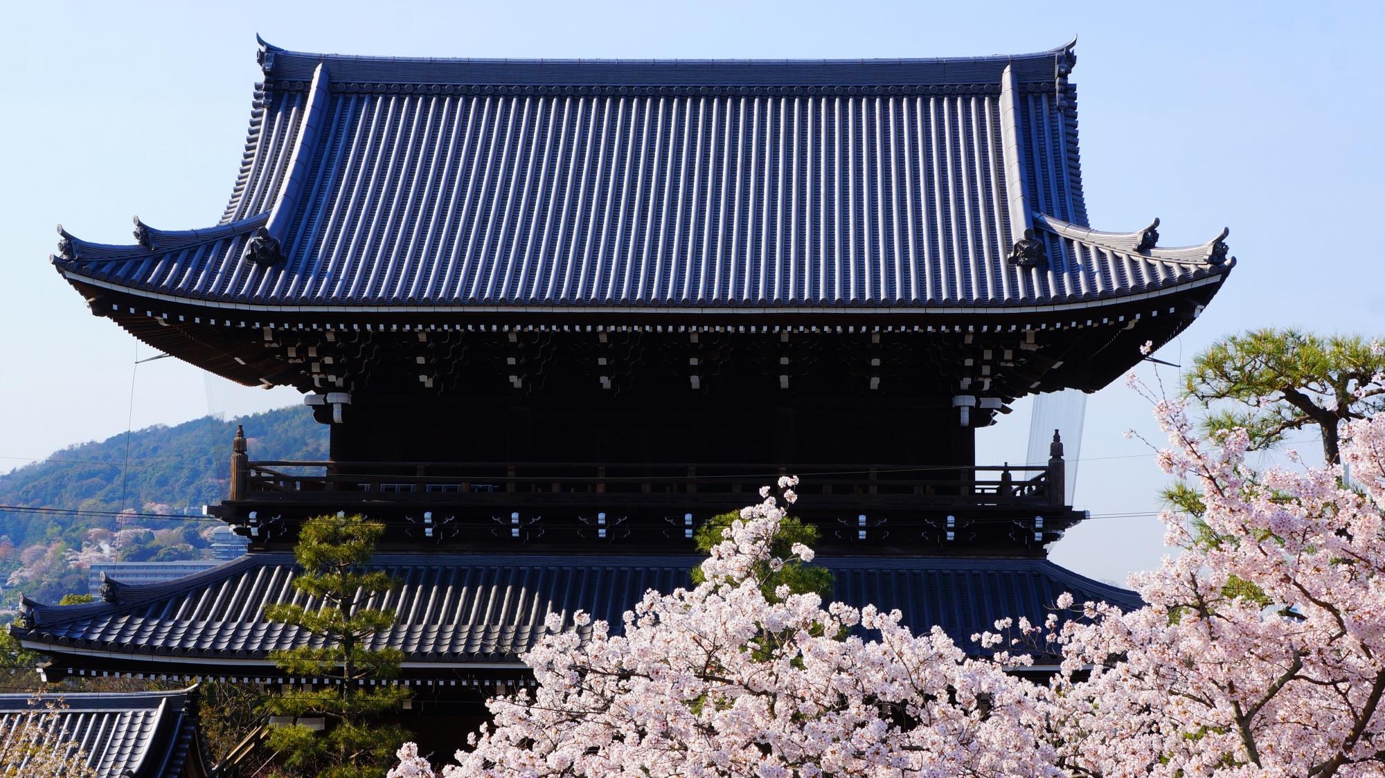 澄んだ空に佇む山門と彩りの桜