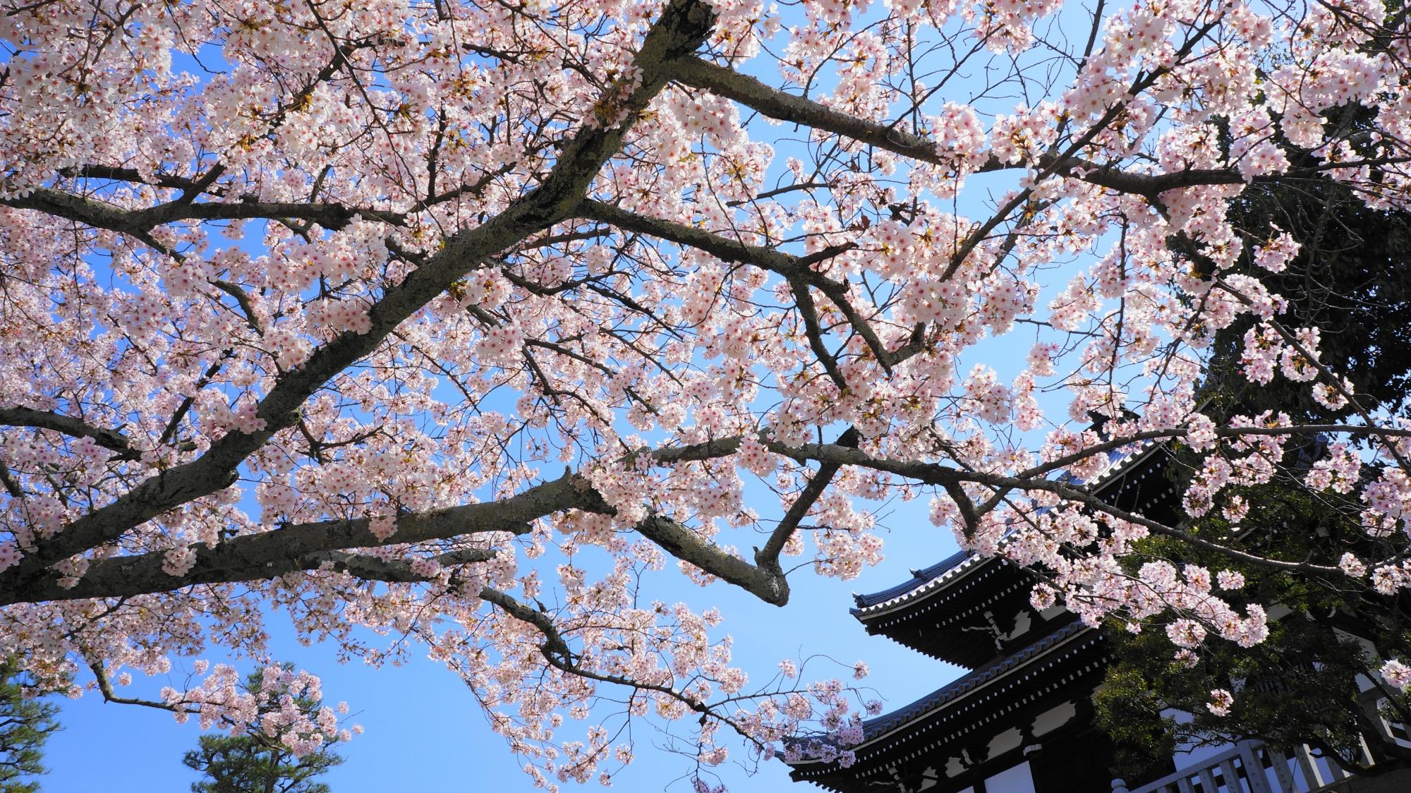 石段の下からの眺めた経蔵と桜