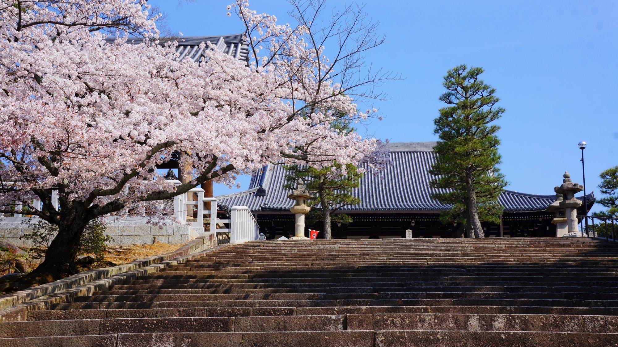 桜が良く合う時代劇に出てきそうな石段