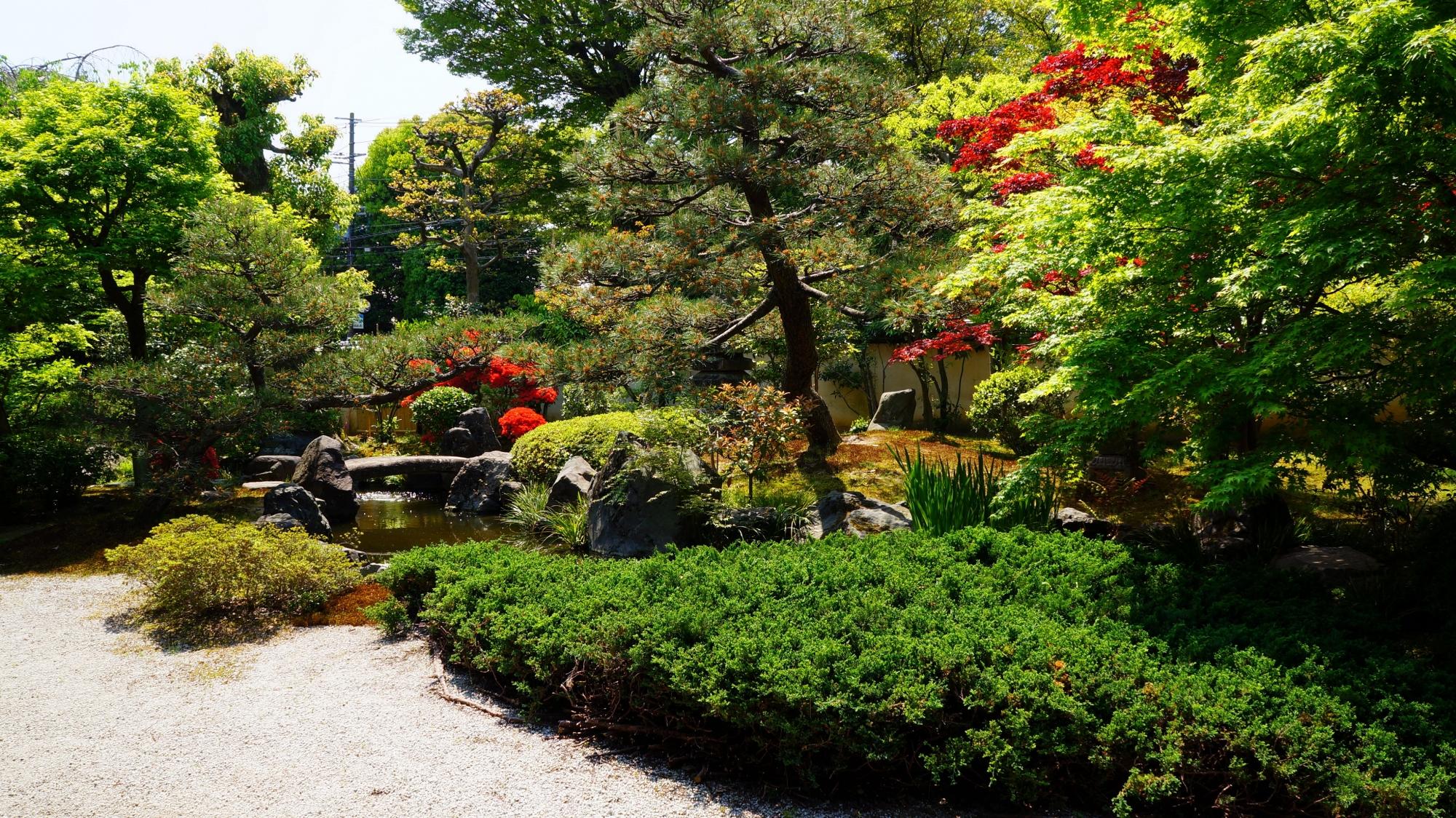 正伝永源院の多種多様な緑や植物と立派なハイビャクシン