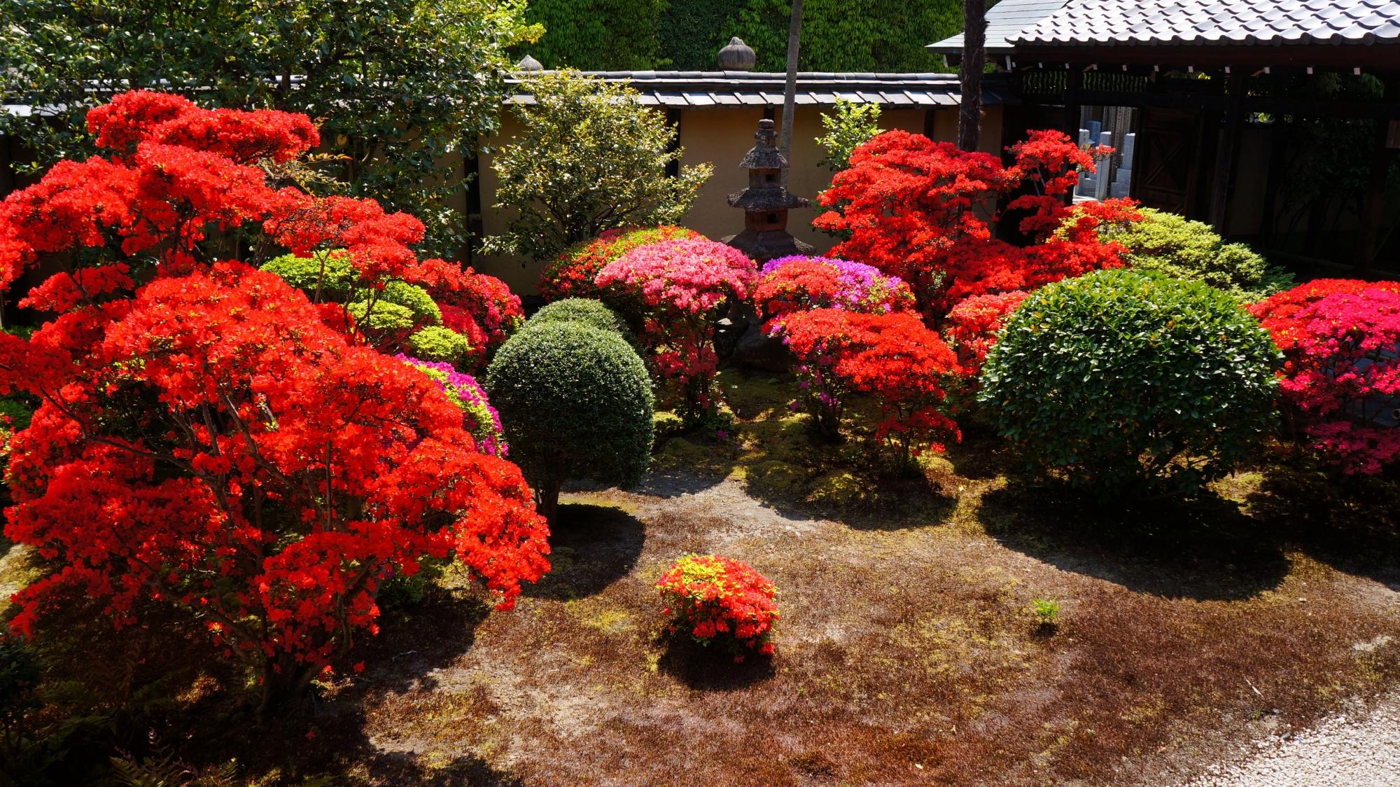 色とりどりのツツジが満開の正伝永源院の南側の庭園