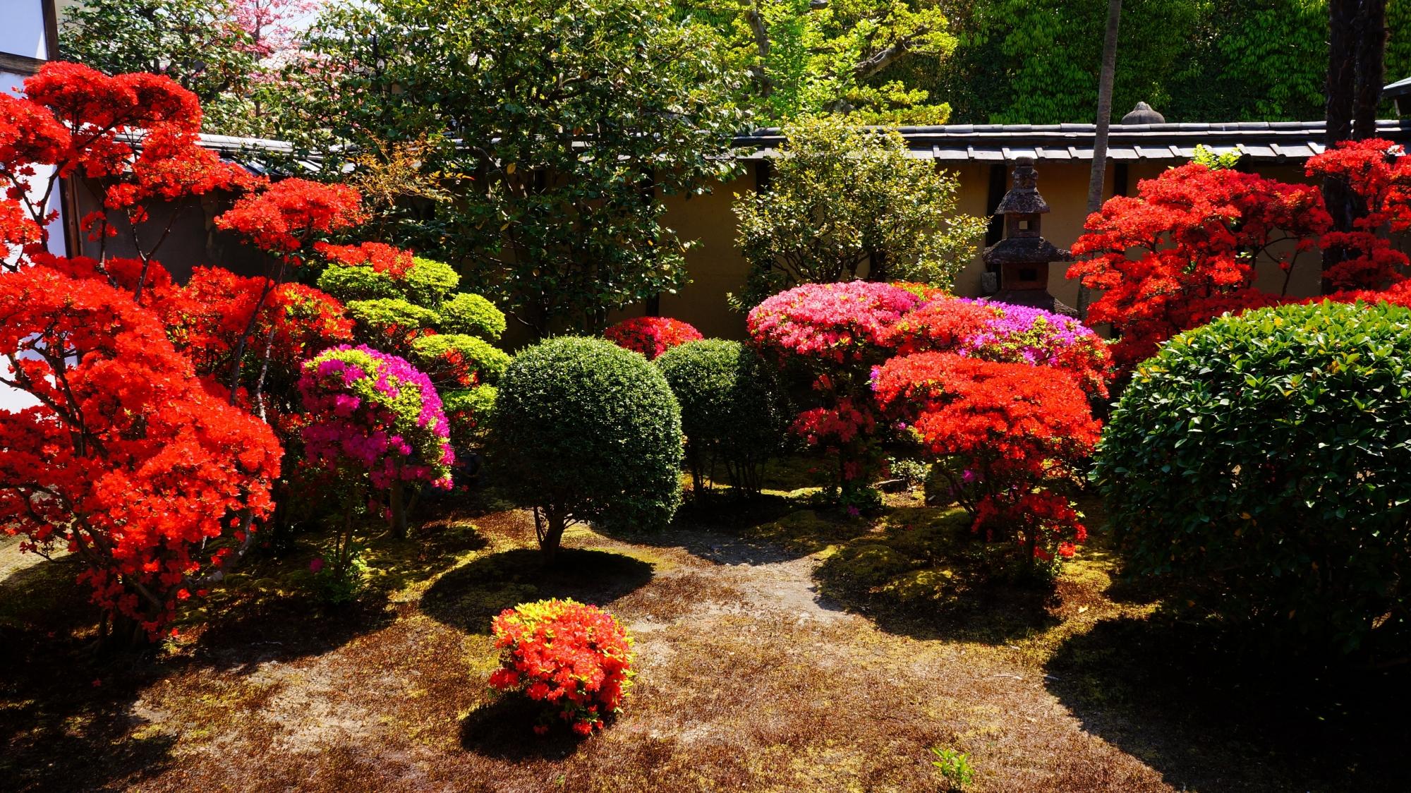 正伝永源院の見事な春の彩りの庭園