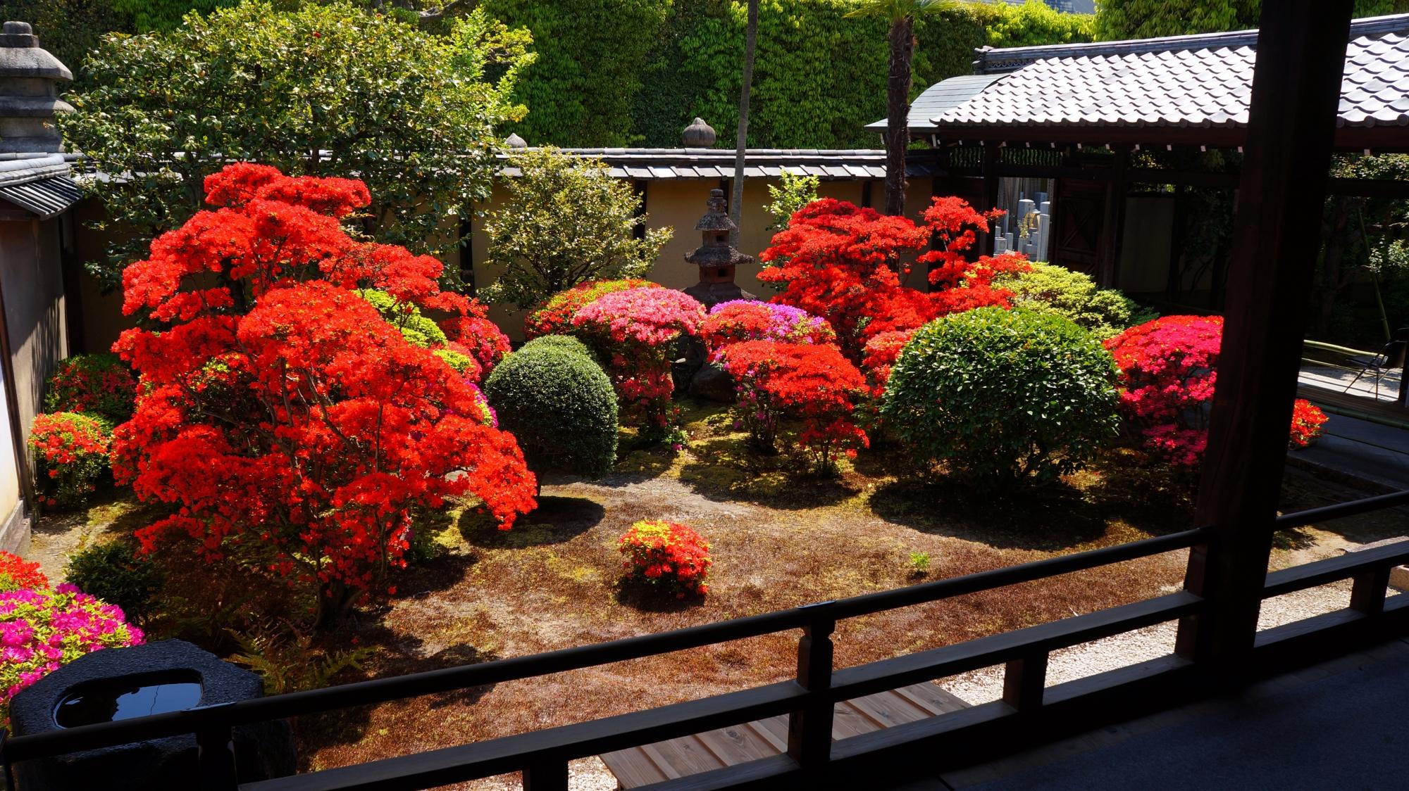 正伝永源院の素晴らしいツツジと煌びやかな春の情景