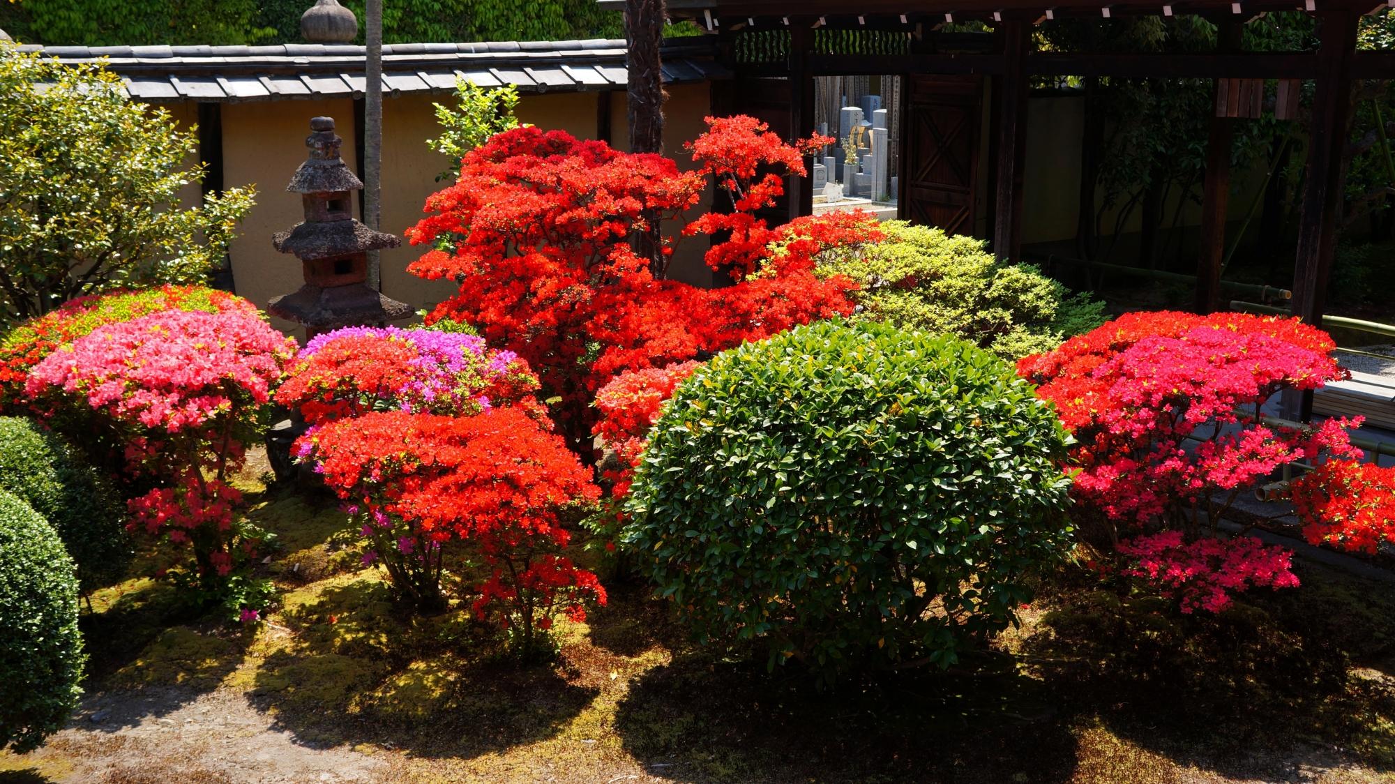 色とりどりの輝くツツジにそまる春の正伝永源院