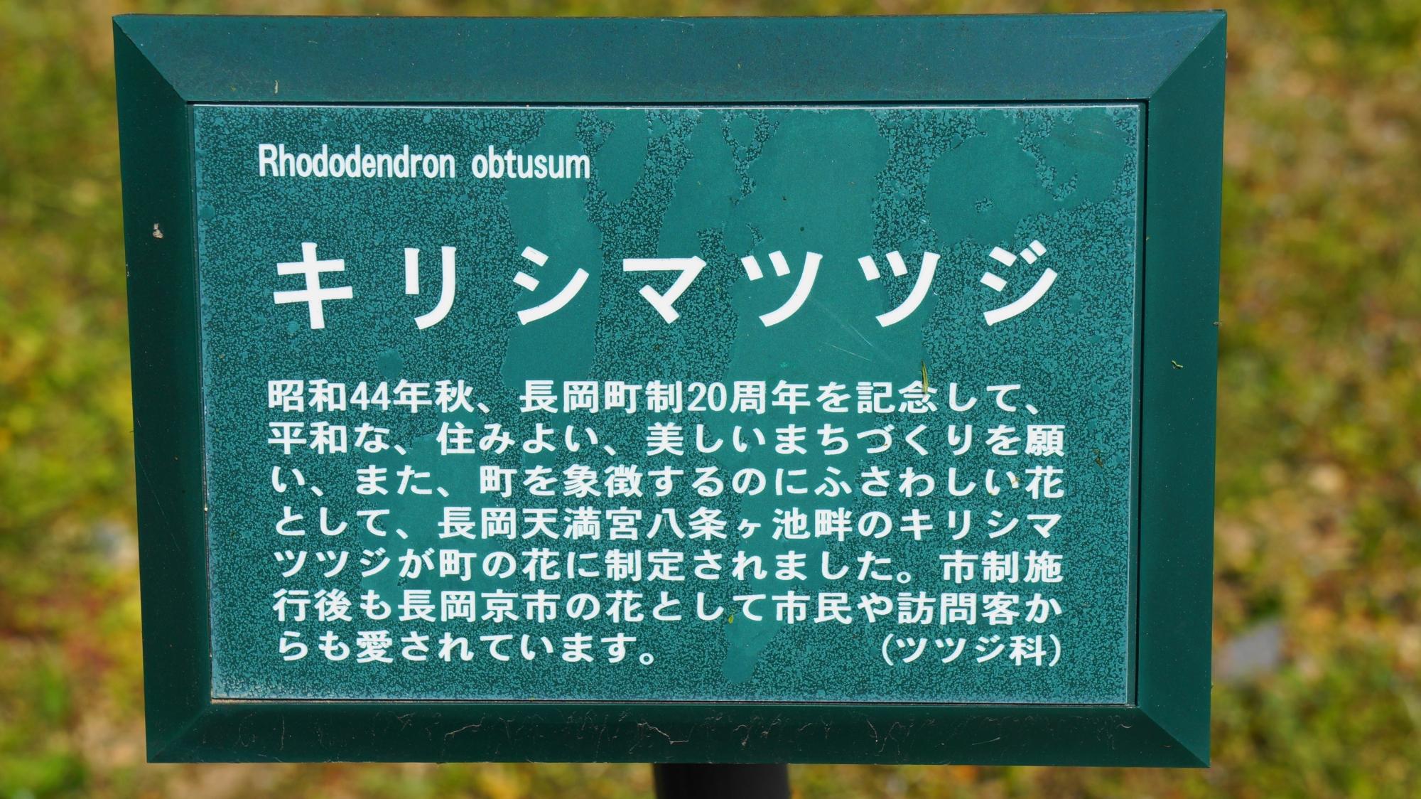 霧島躑躅(キリシマツツジ)の説明