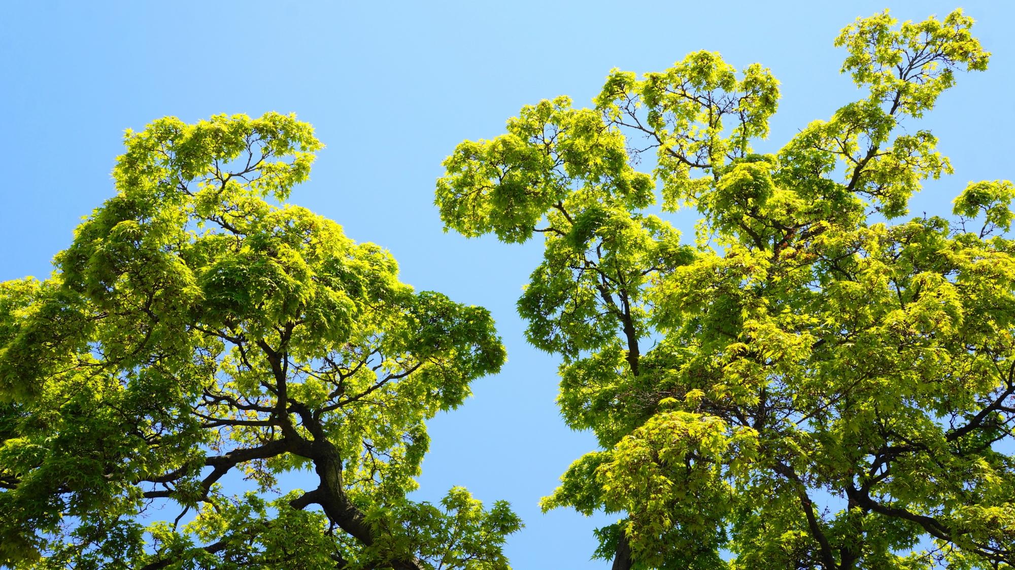 八条ヶ池の綺麗な眩しい緑の新緑や青もみじ
