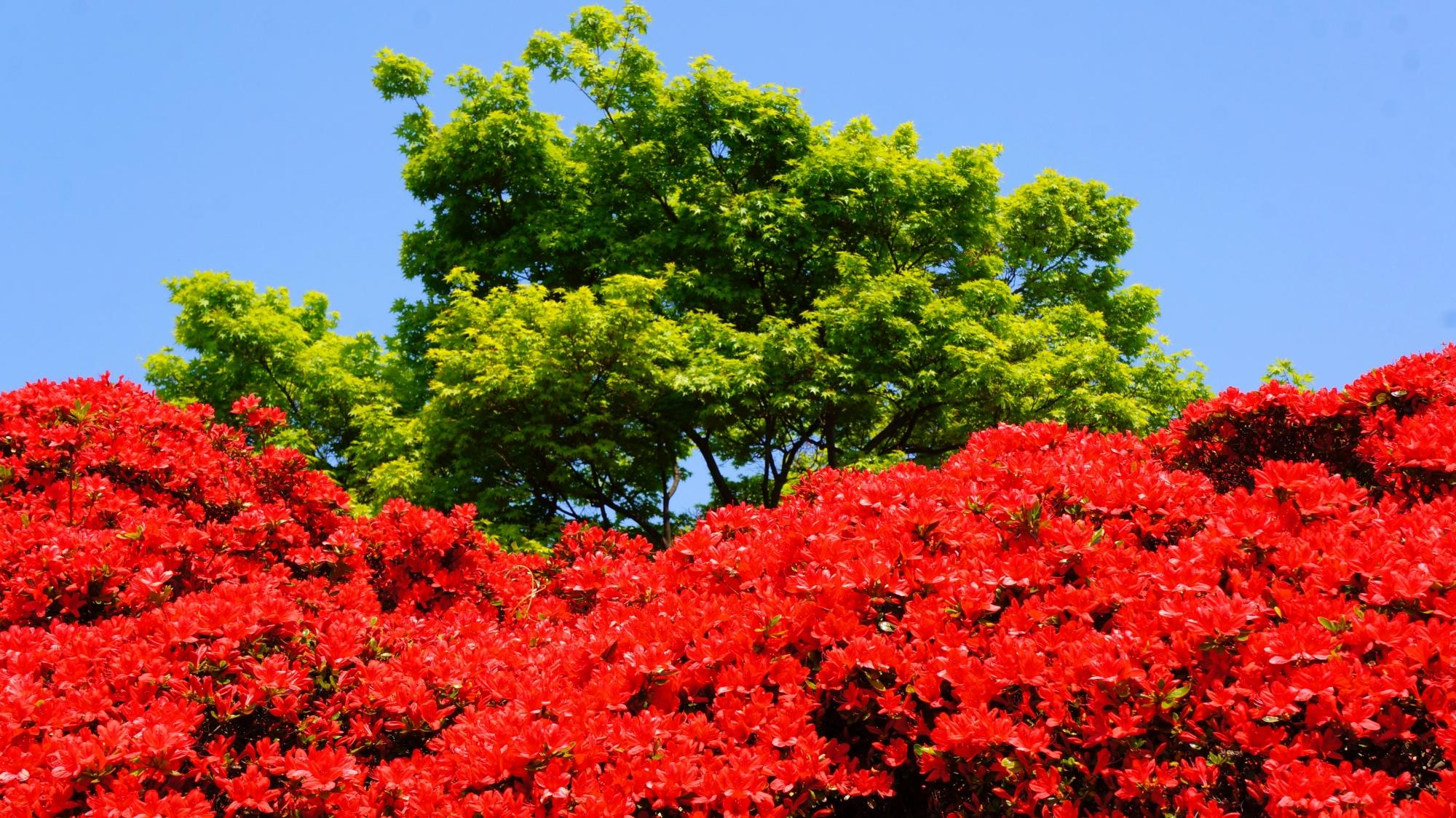 煌く赤と眩い緑の見事なコントラスト